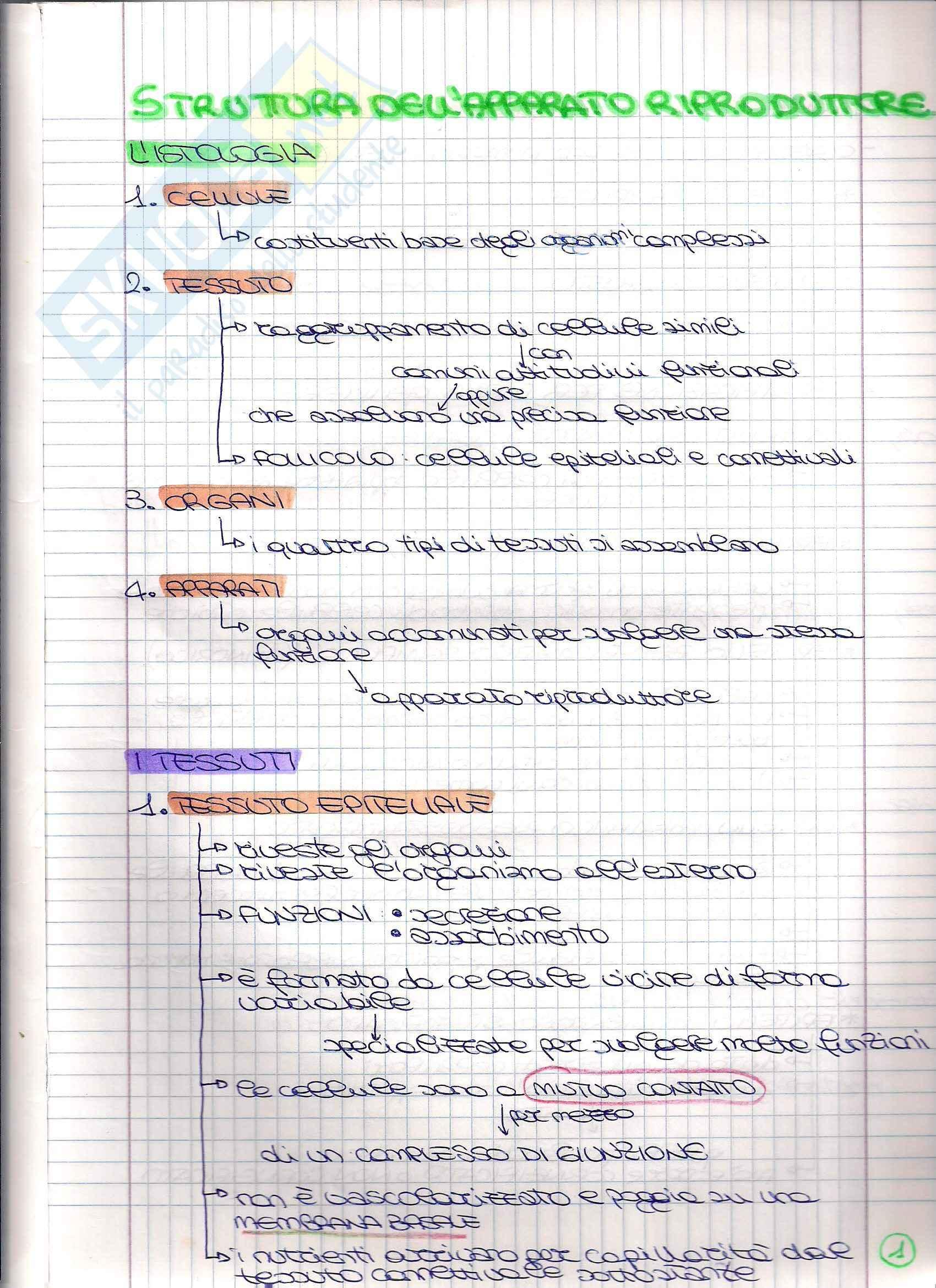 Struttura dell'apparato Riproduttore - Appunti