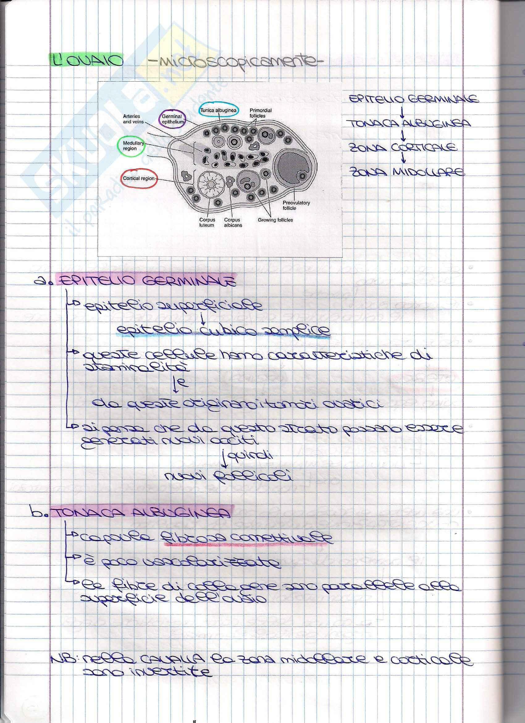 Struttura dell'apparato Riproduttore - Appunti Pag. 46