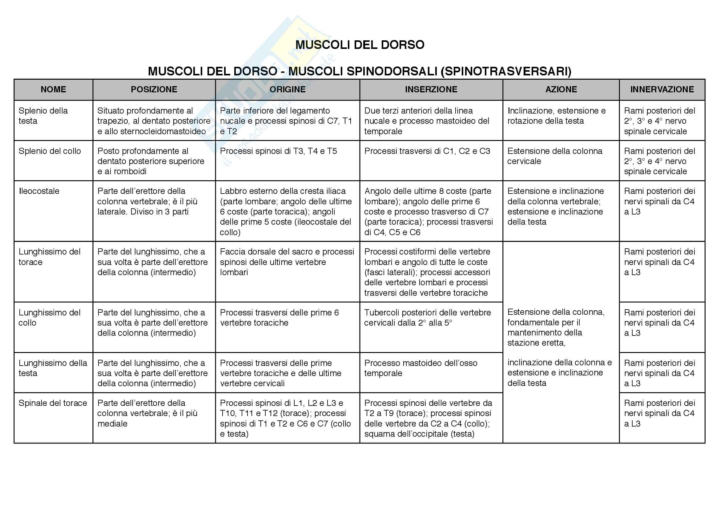 Anatomia: articolazioni e muscoli(posizione,origine, inserzioni, azione,innervazione) Pag. 26