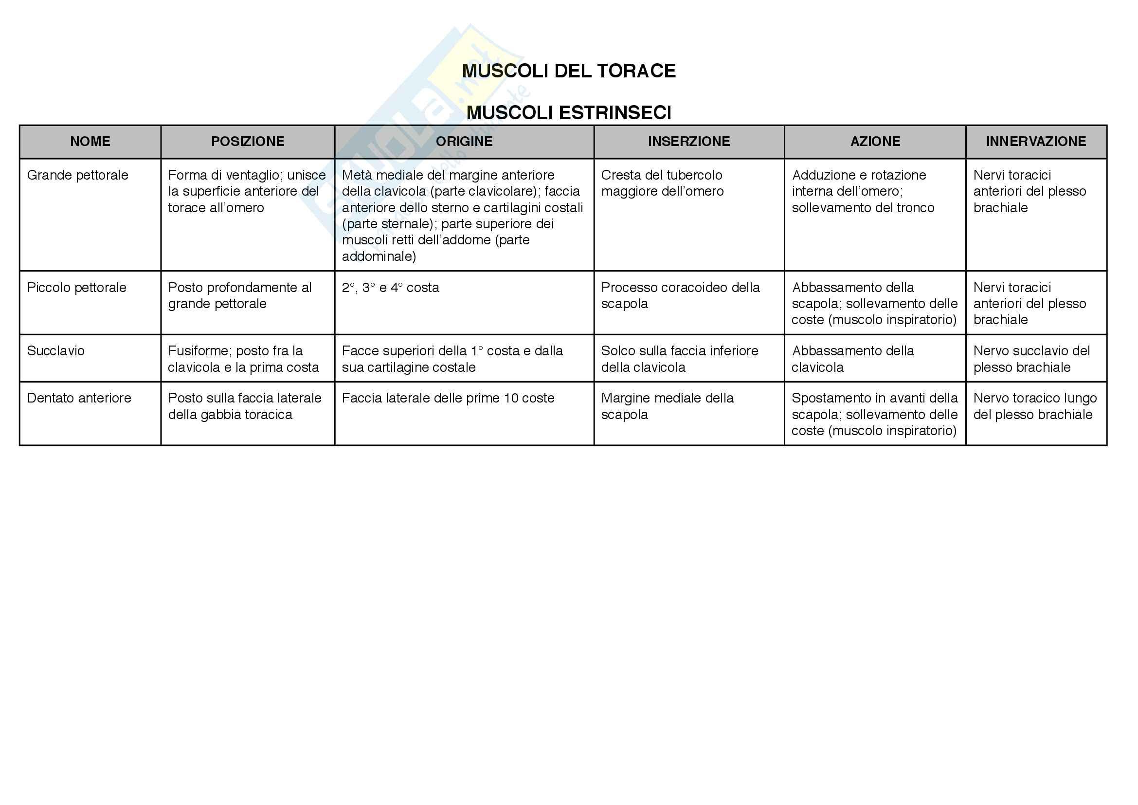 Anatomia: articolazioni e muscoli(posizione,origine, inserzioni, azione,innervazione) Pag. 31