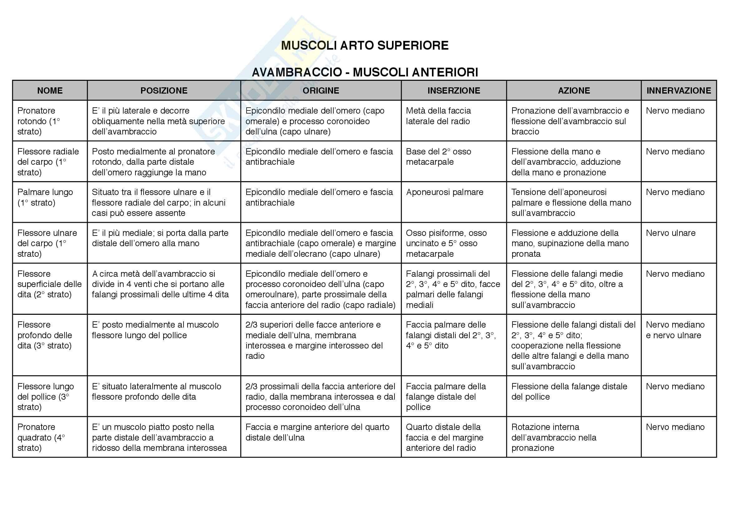 Anatomia: articolazioni e muscoli(posizione,origine, inserzioni, azione,innervazione) Pag. 51