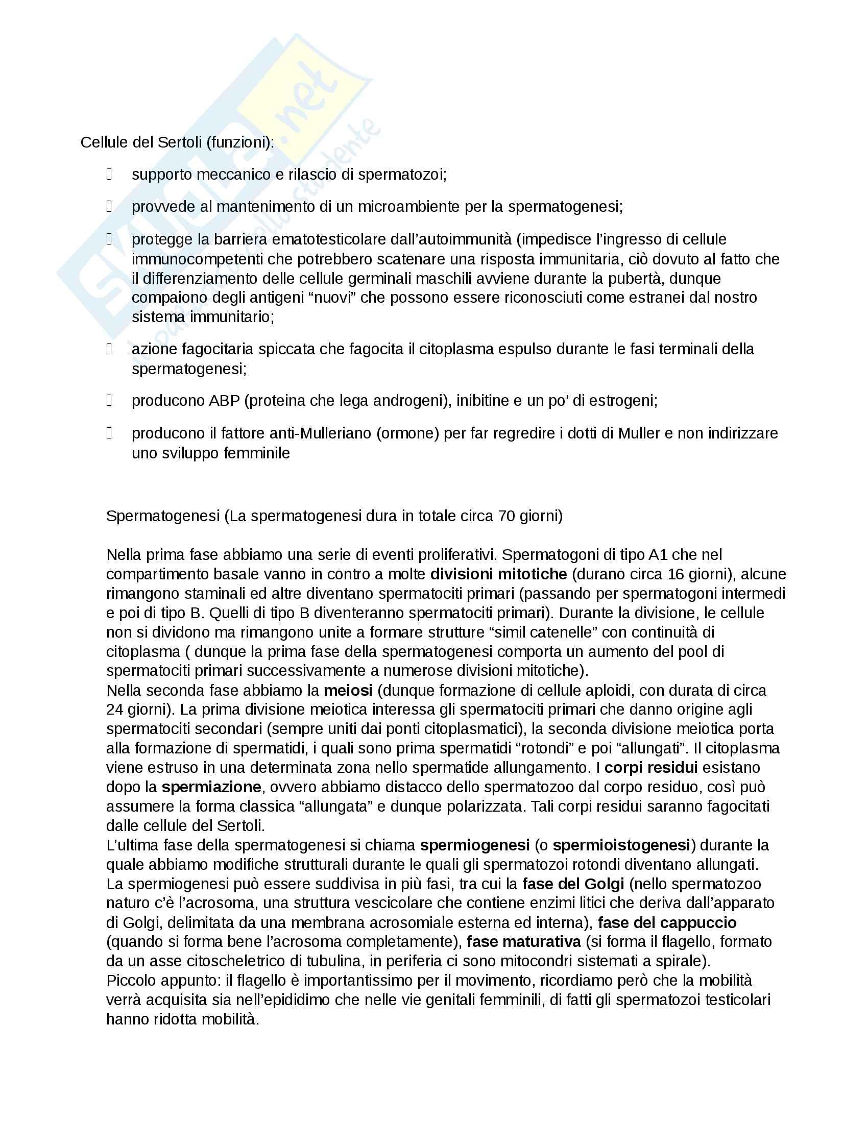 Embriologia Pag. 2