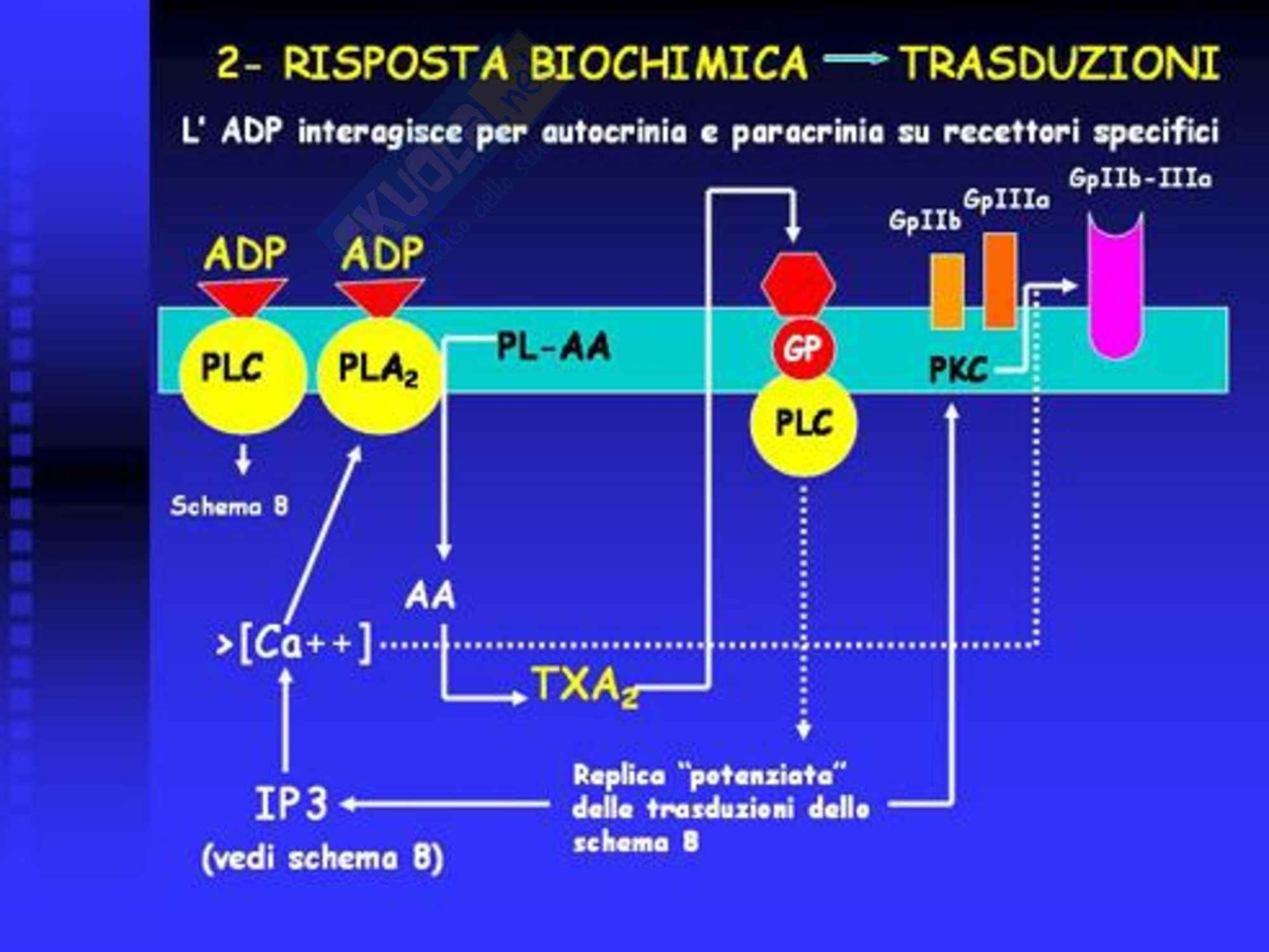 Fisiopatologia dell'Emostasi Pag. 16