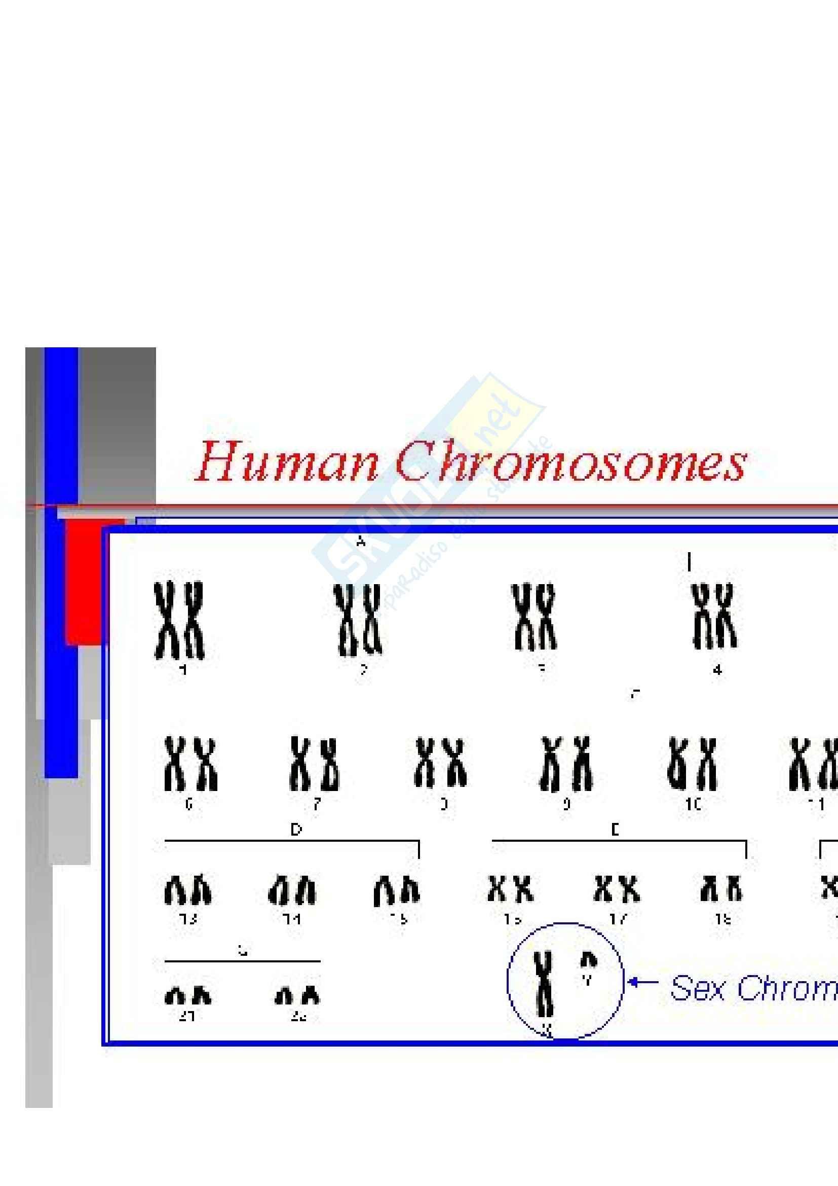 Biologia molecolare - malattie X-Linked recessive