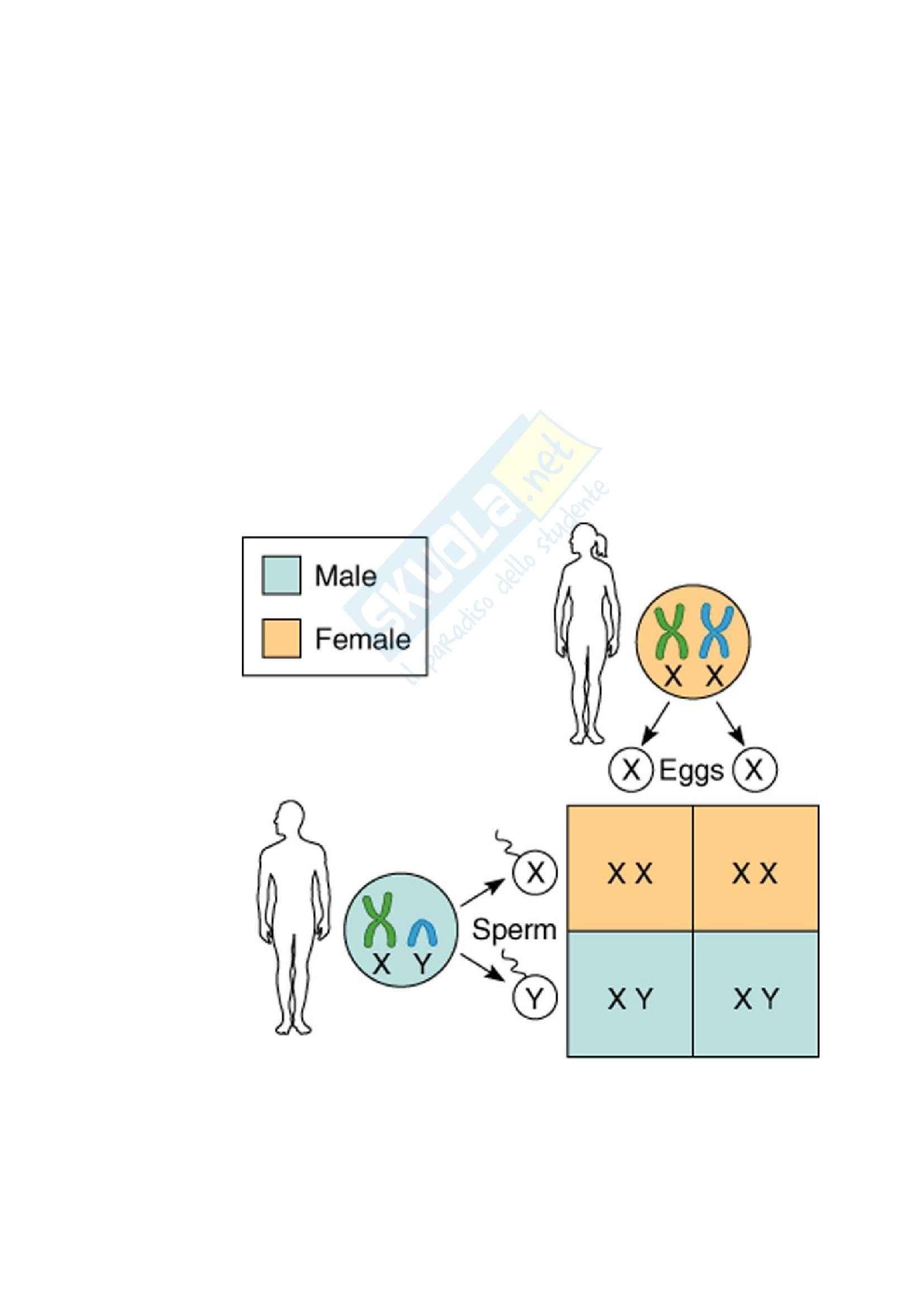 Biologia molecolare - malattie X-Linked recessive Pag. 6