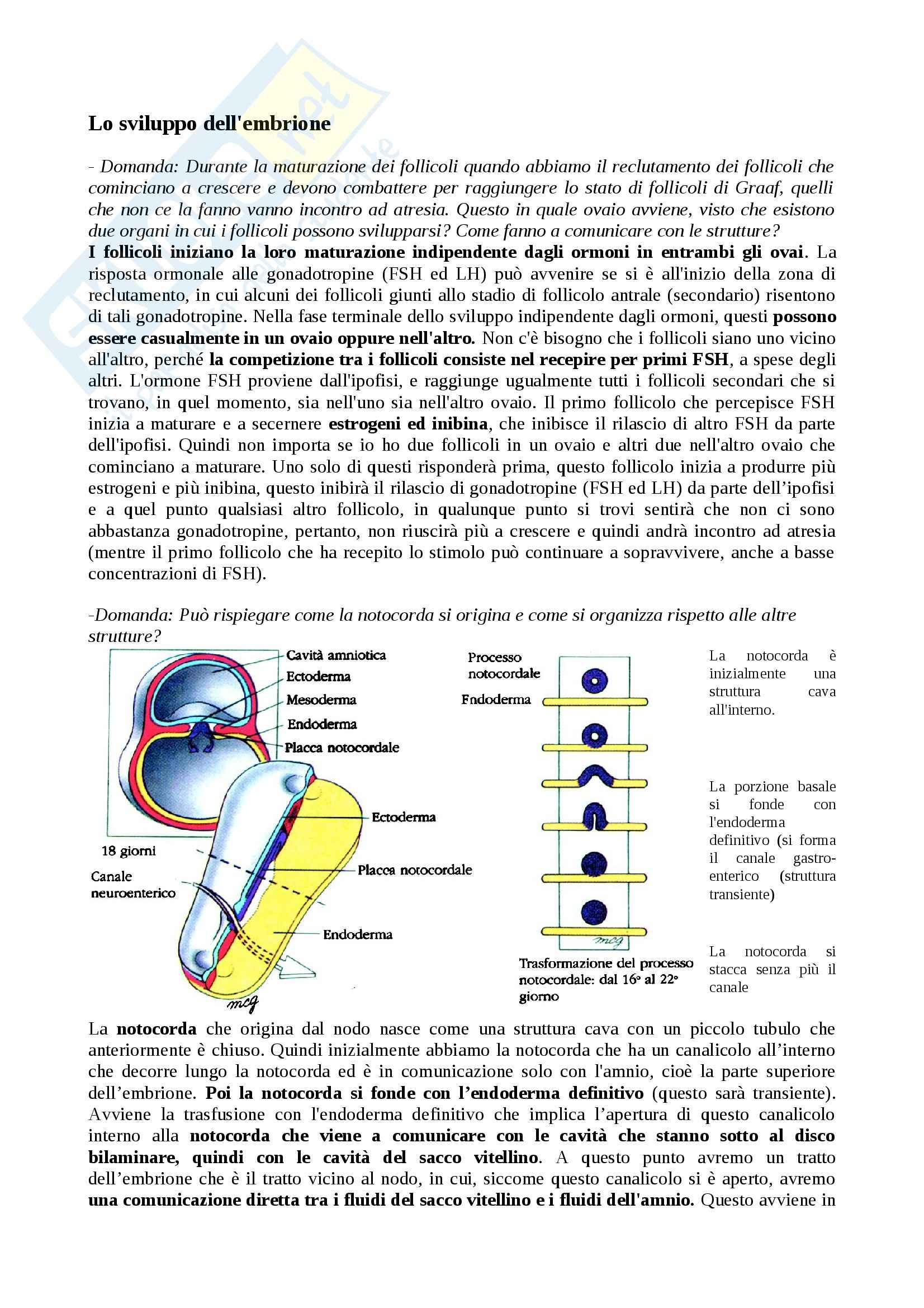 Neurulazione, Neurogenesi e Ripiegamento dell'embrione, Embriologia