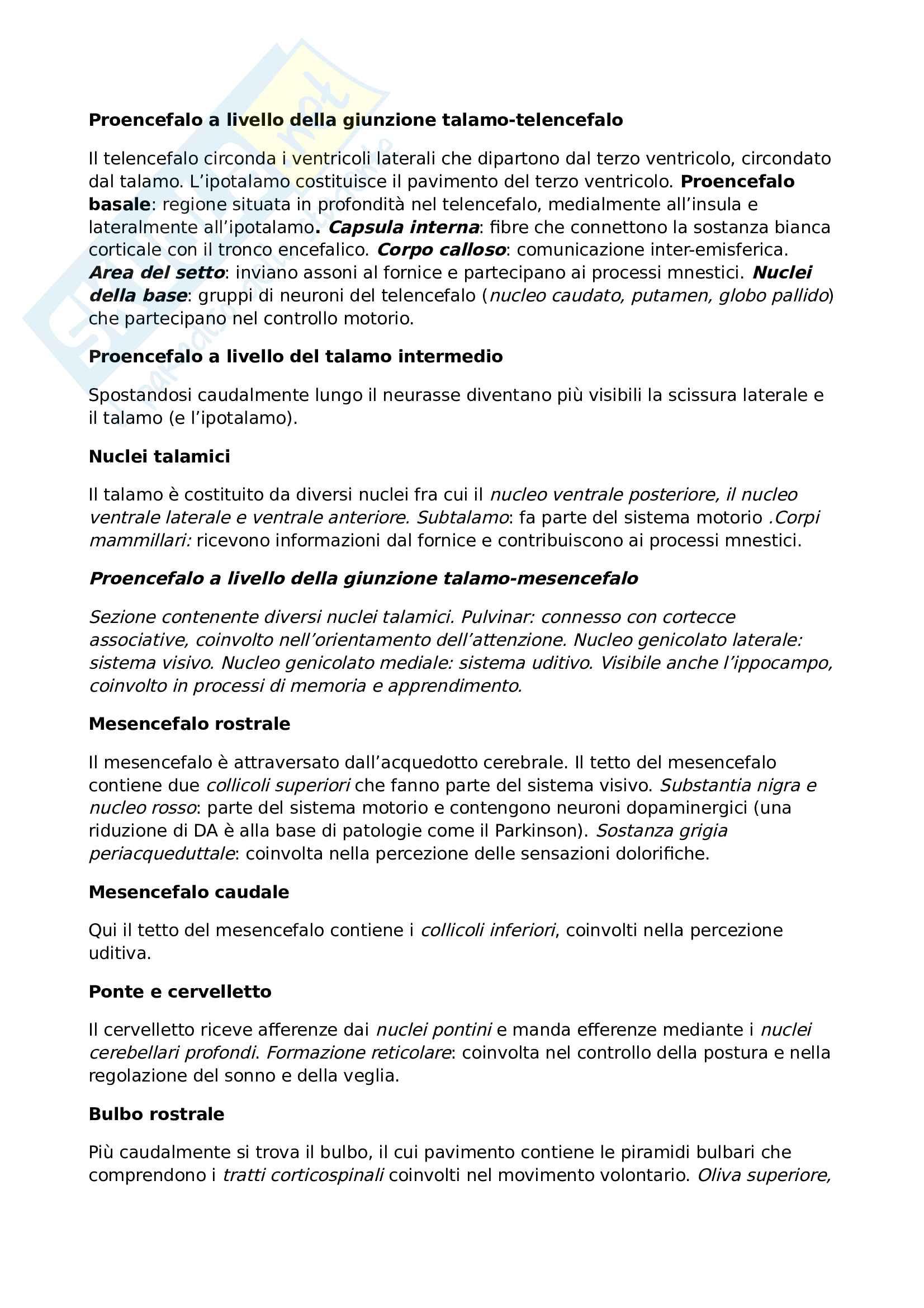 Riassunto esame Fondamenti anatomo-fisiologici dell'attività psichica, prof. Perri, libri consigliati: Principi di Neuroscienze, Kandel, Sckwartz, Jessel; Neuroscienze, Bear, Connors, Paradiso Pag. 11