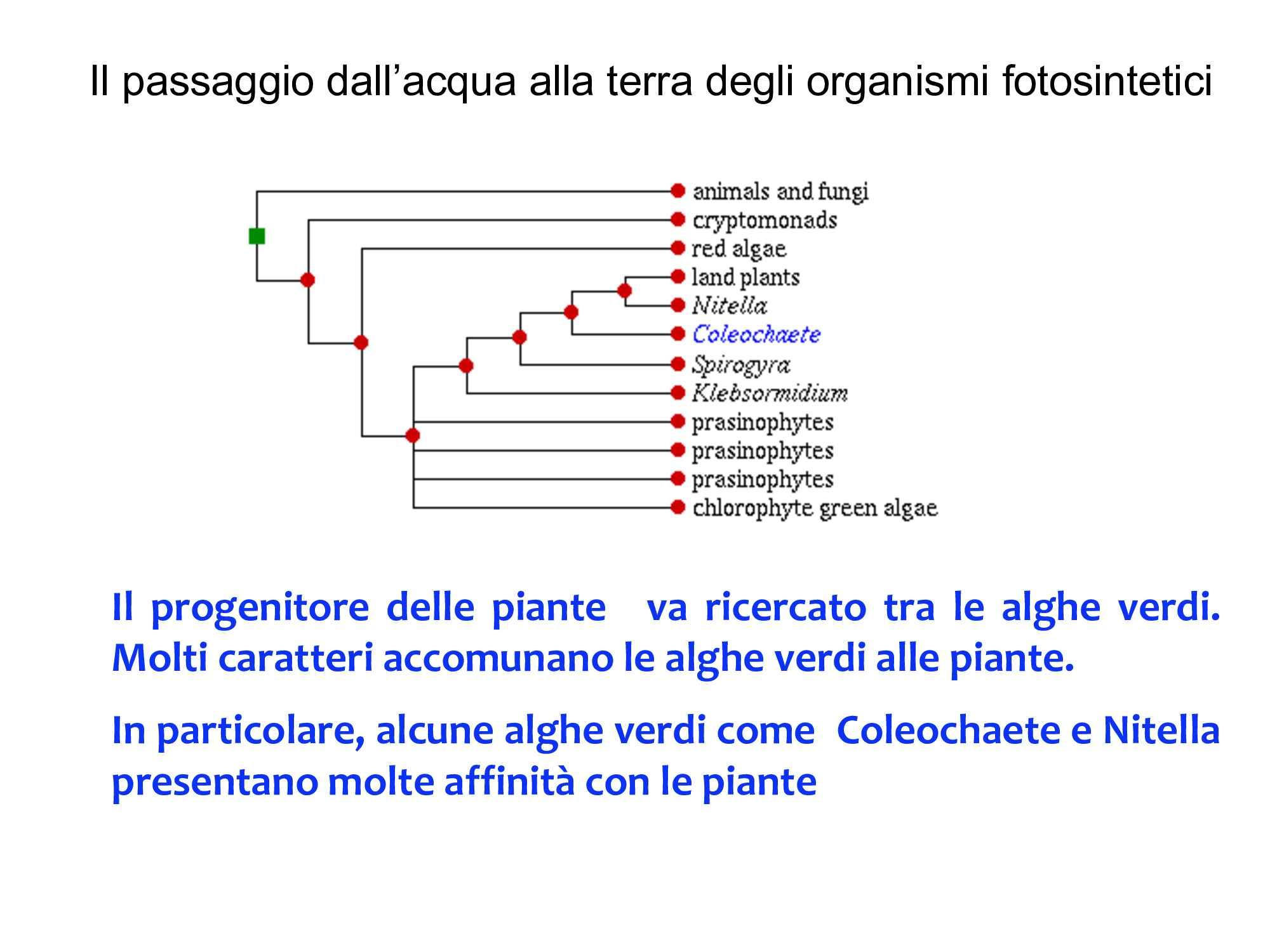 Il passaggio dall'acqua alla terra degli organismi fotosintetici