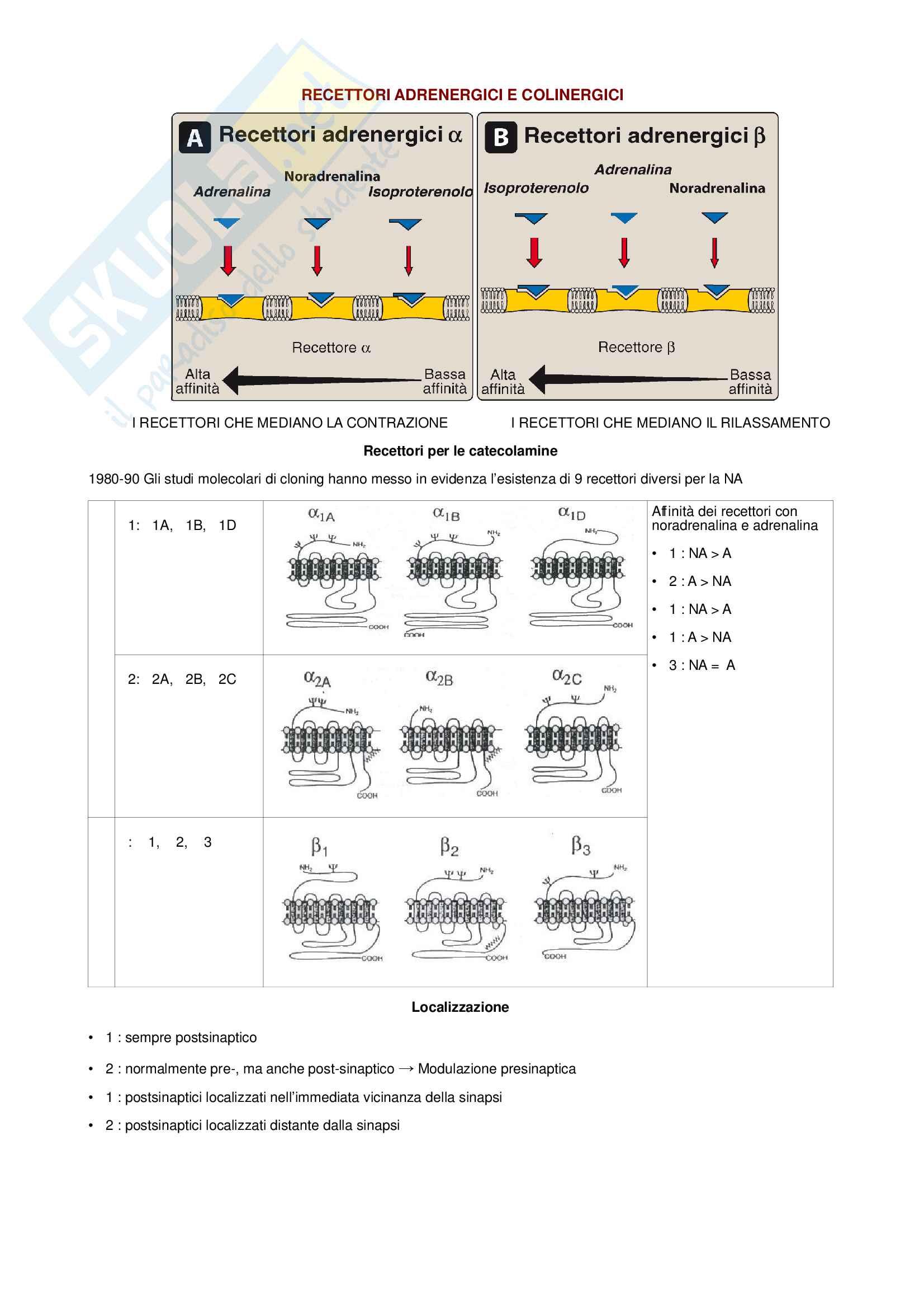 Farmacologia - Recettori adrenergici e colinergici, neurotrasmissione adrenergica e antagonisti dei recettori adrenergici BIO/14