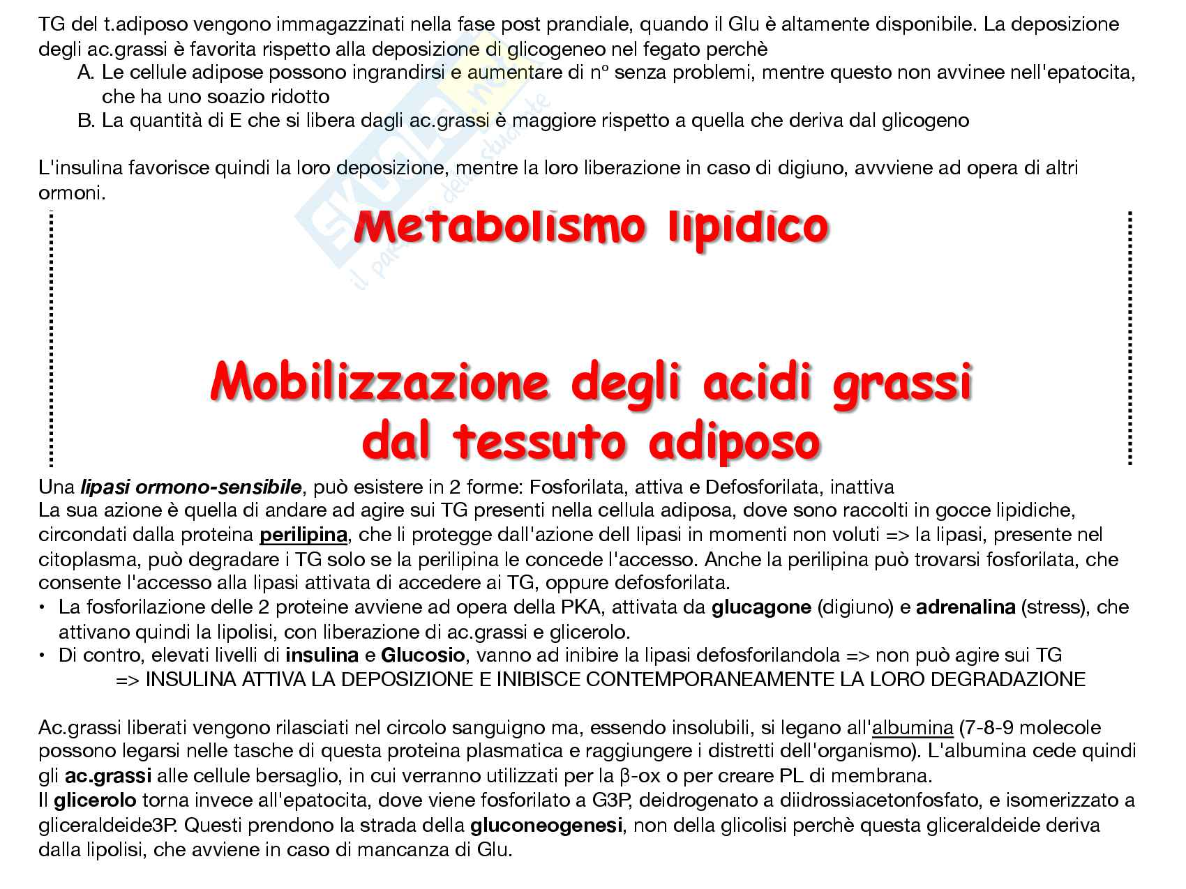 10 Biosintesi dei TG, trasporto via VLDL, deposito e mobilizzazione da tessuto adiposo Pag. 11