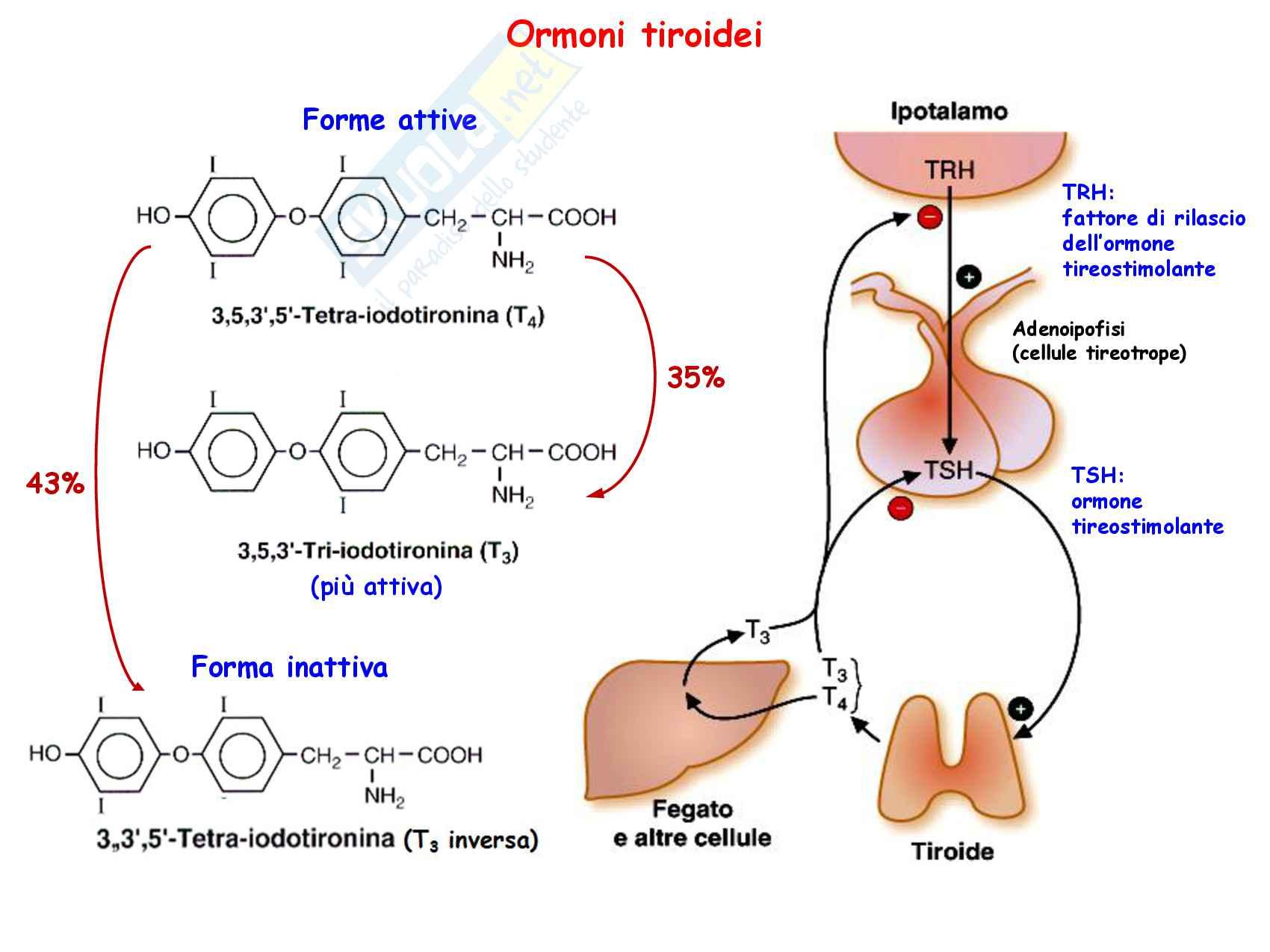 26 Destini anabolici degli aminoacidi Pag. 36