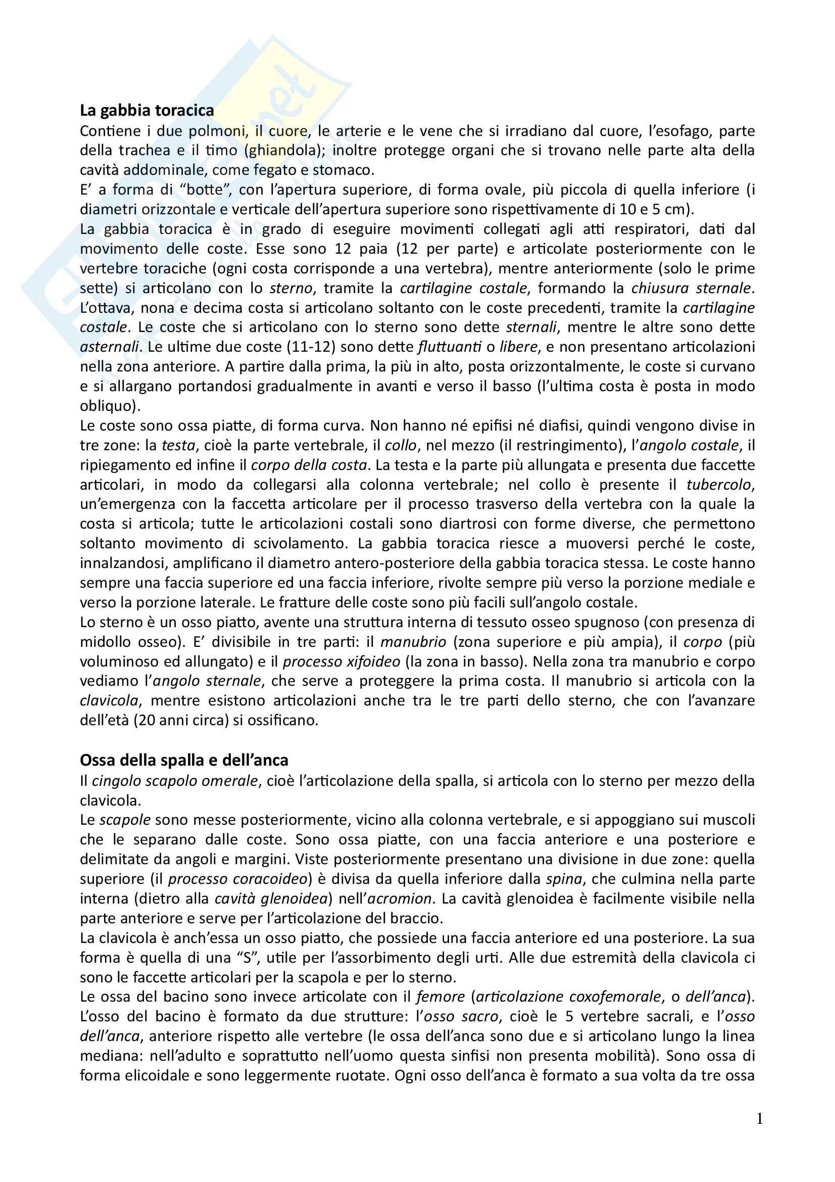 Riassunto esame Anatomia Umana, prof. Turci, libro consigliato Anatomia Umana, Martini, Timmons, Tallitsch Pag. 11