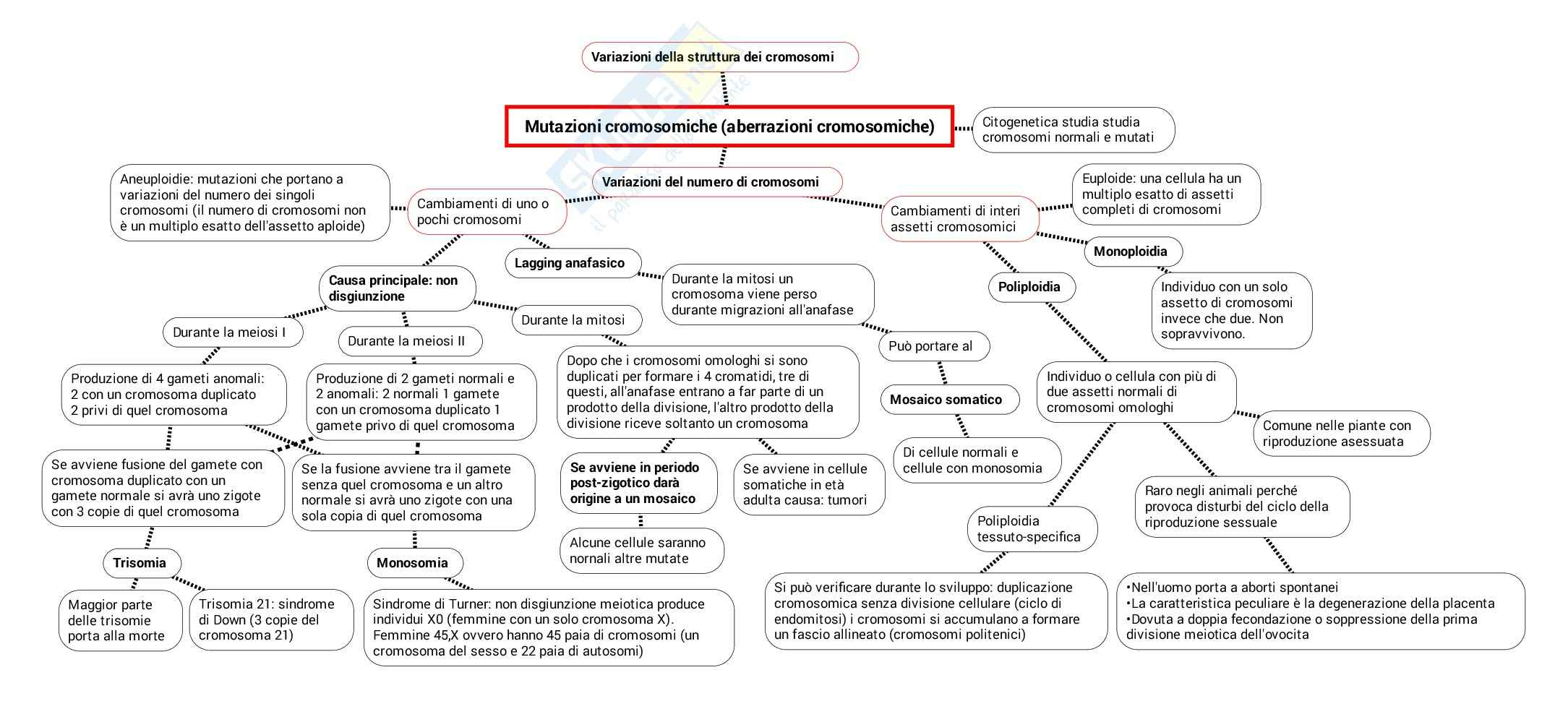 Schema su Variazioni della struttura e del numero dei cromosomi
