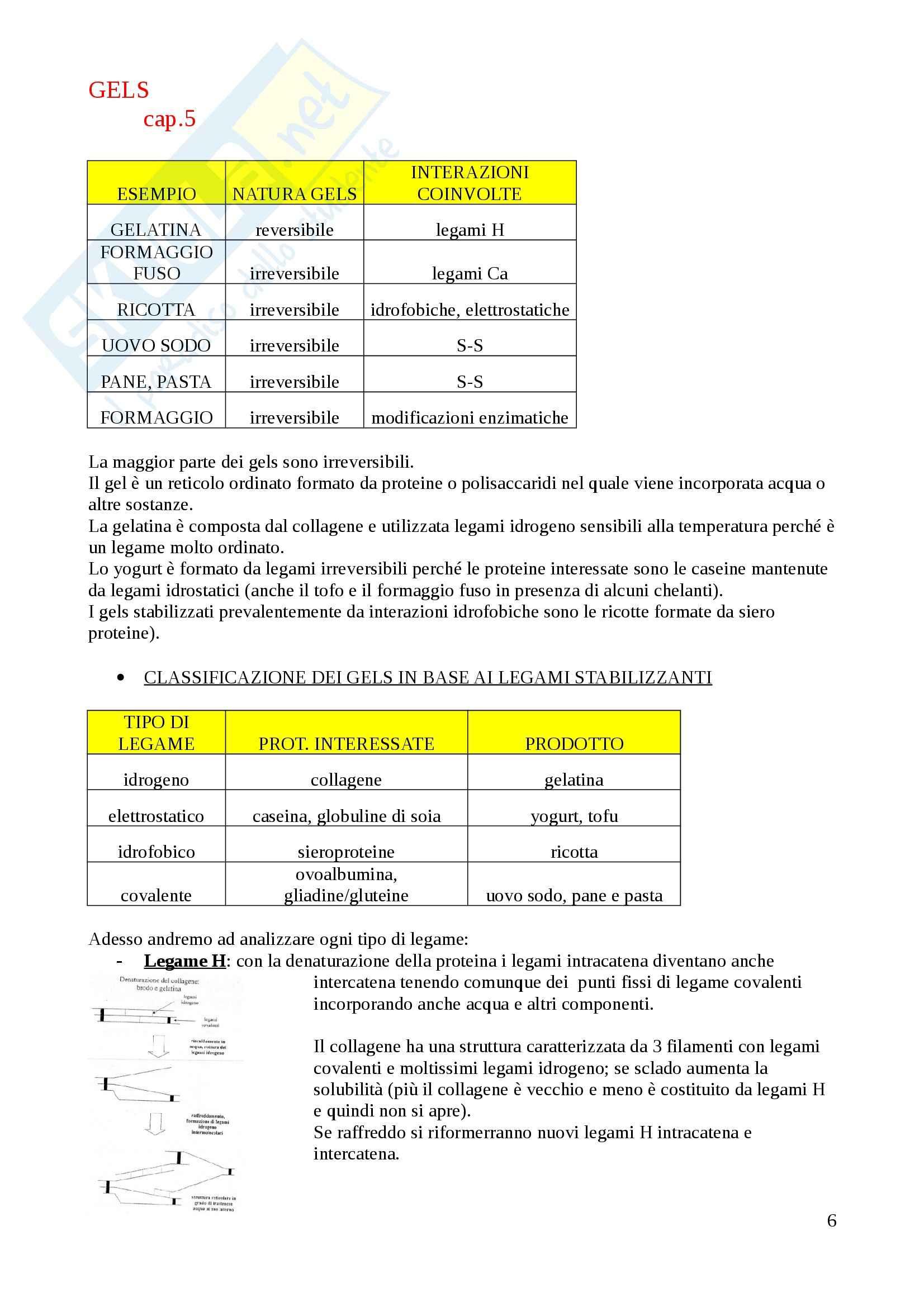 Biochimica alimentare - biochimica alimentare Pag. 6