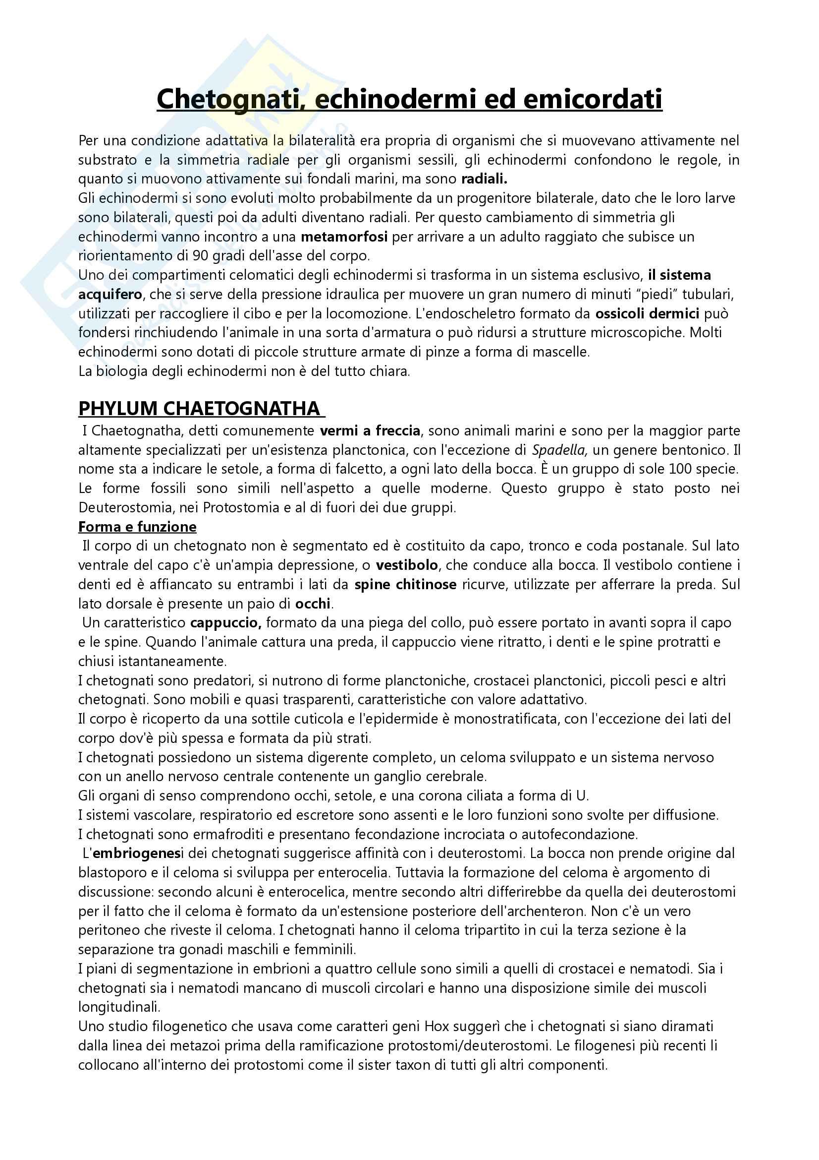 Appunti su Chetognati echinodermi ed emicordati, Esame di Zoologia