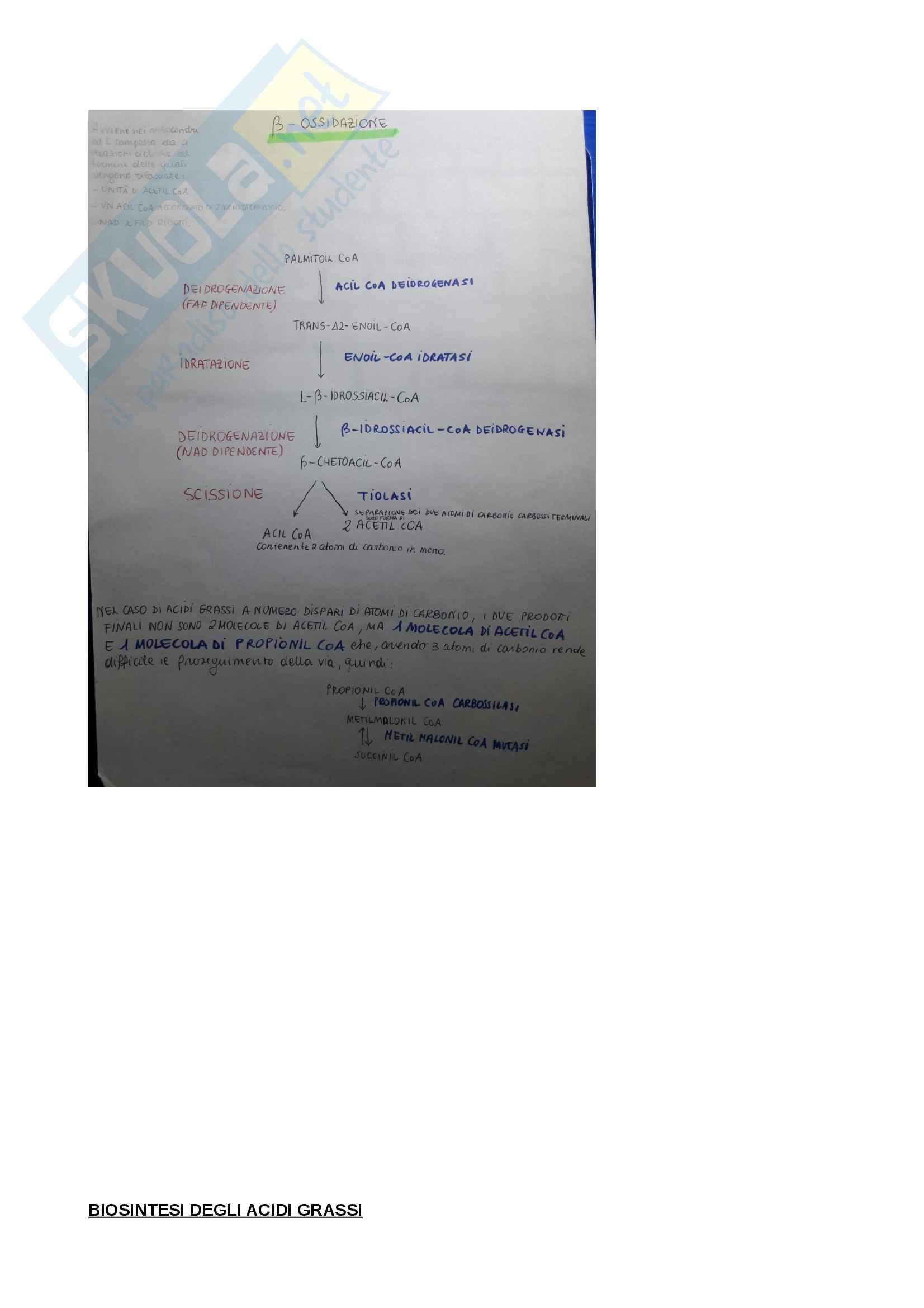 Biochimica per Infermieristica Pag. 11