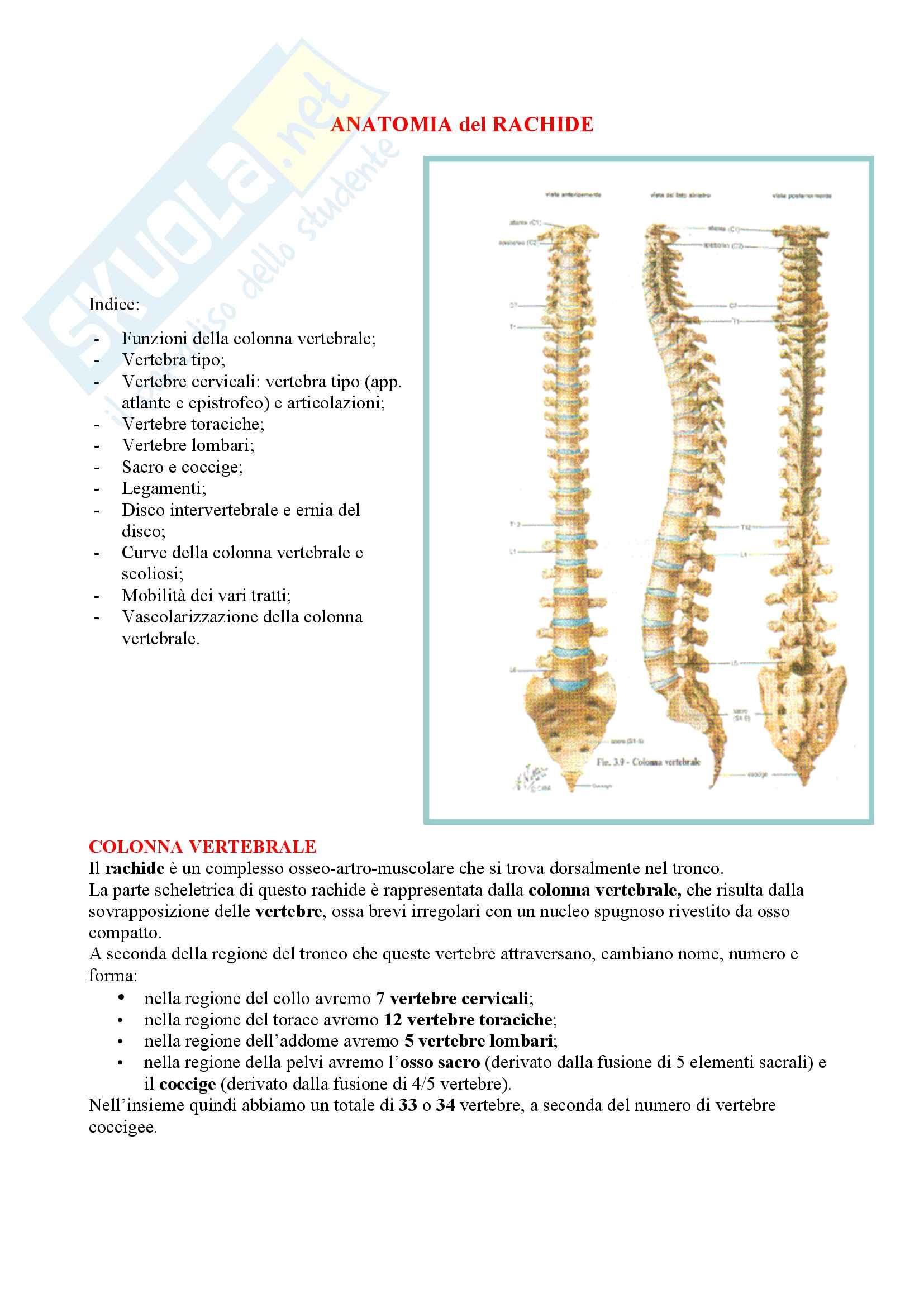 Anatomia - Colonna vertebrale