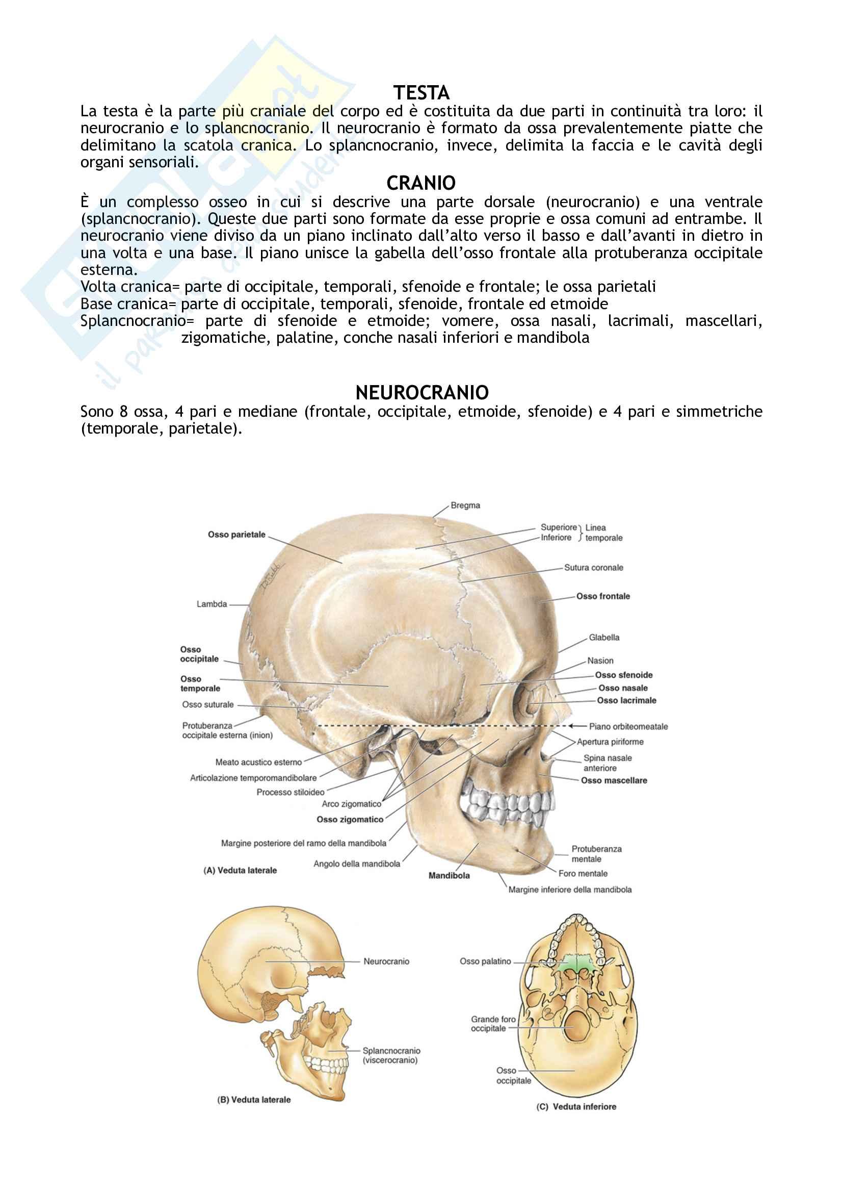 Riassunto esame Anatomia umana, prof. Fabrizi, libro consigliato Anastasi