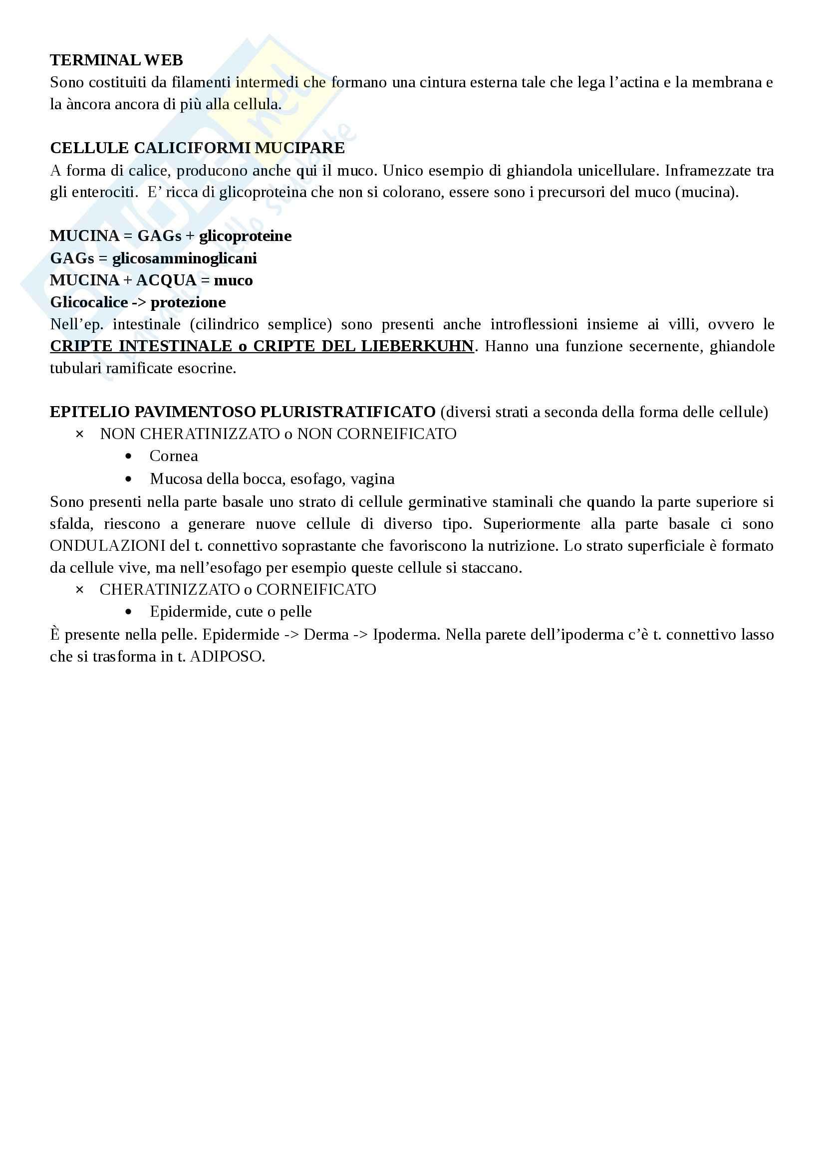 Tessuto epiteliale Pag. 6
