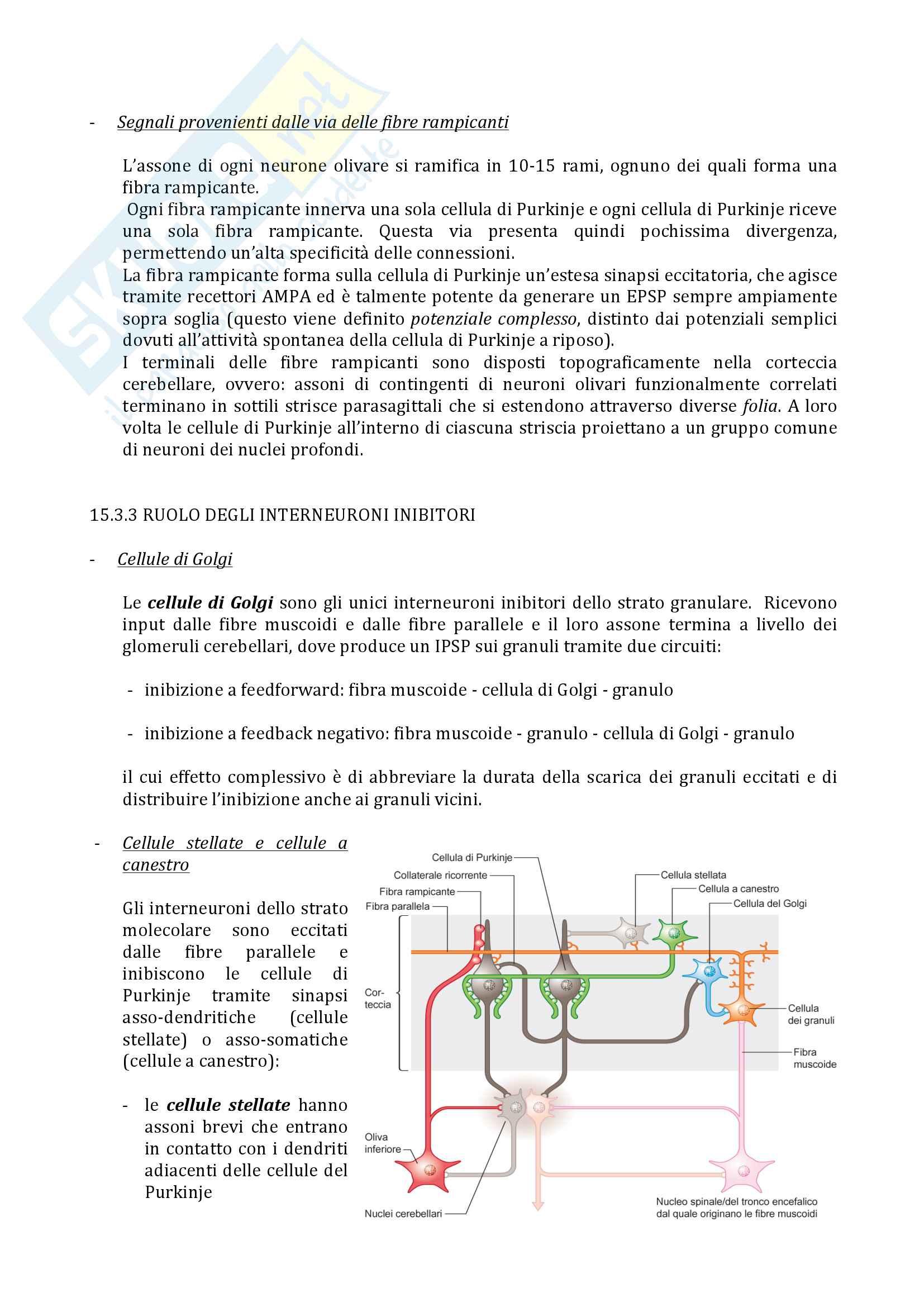 15 Cervelletto Pag. 6