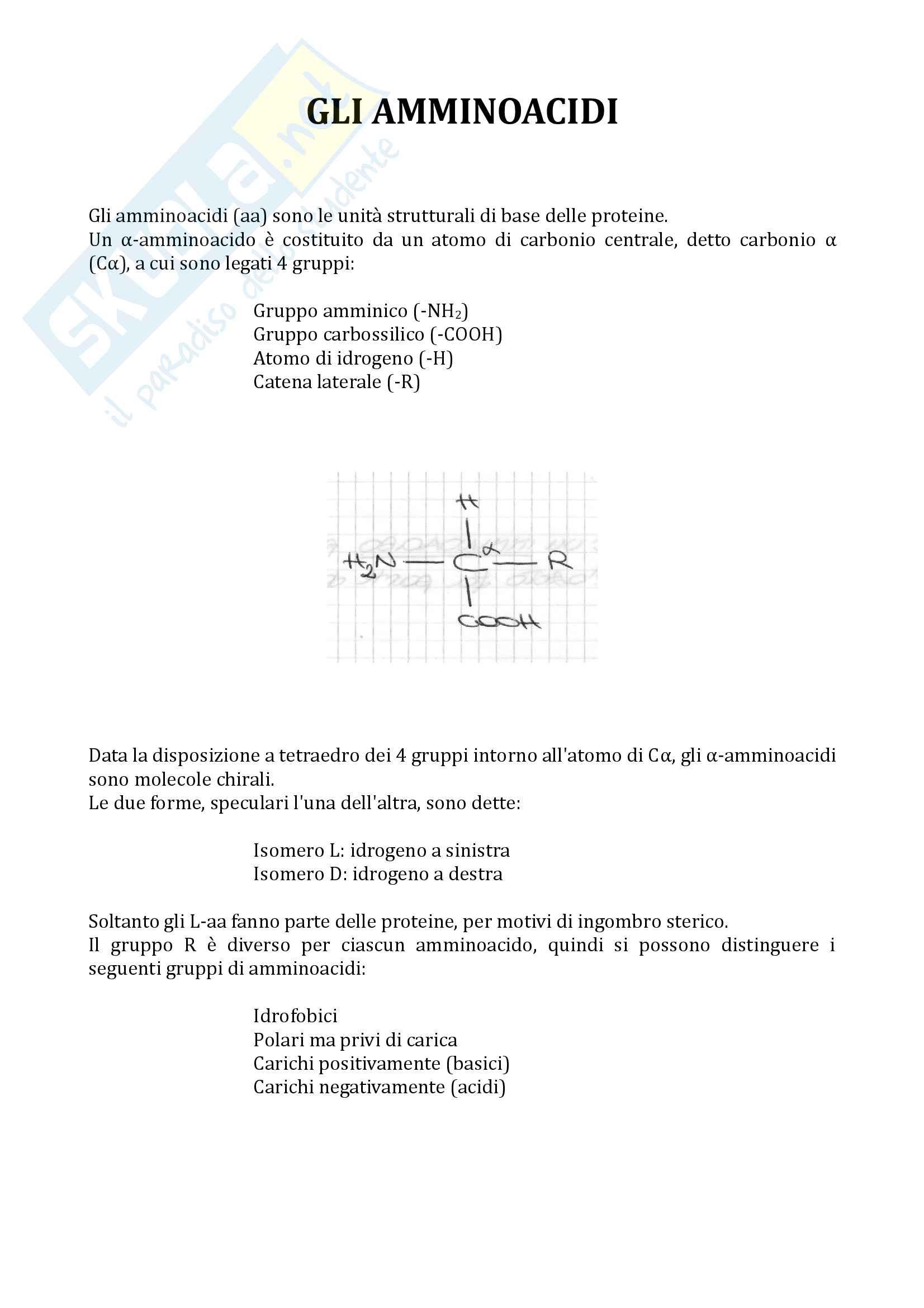 Amminoacidi e Proteine