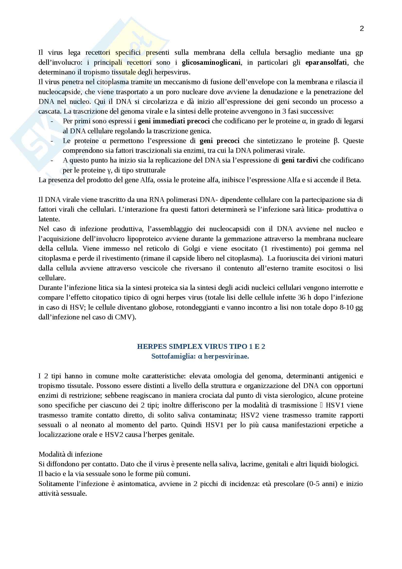 Lezioni, Virologia Pag. 2