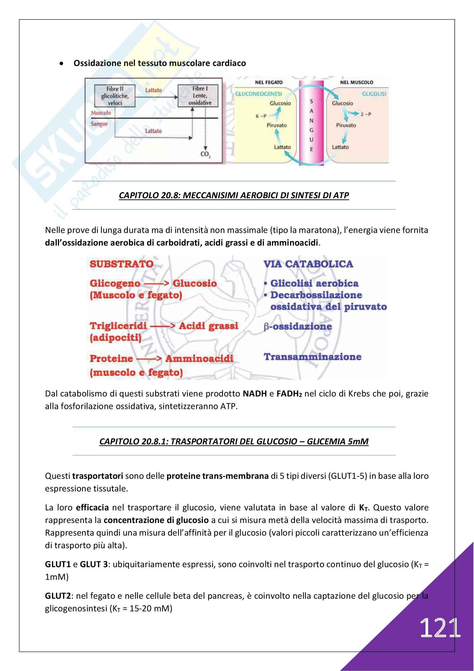 Biochimica Umana - 1° Anno Scienze Motorie Pag. 121
