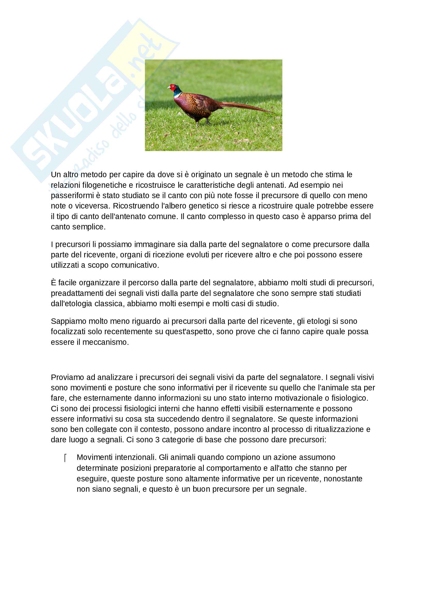 Comunicazione animale Pag. 16