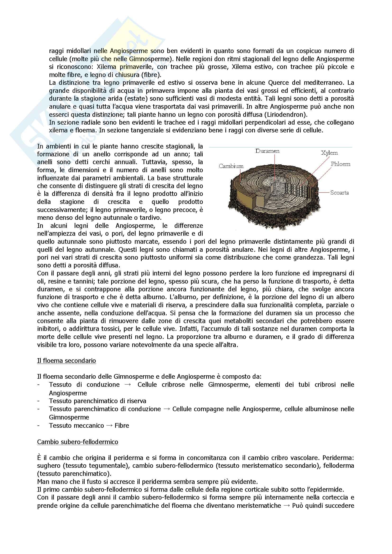 Botanica 2 Pag. 11