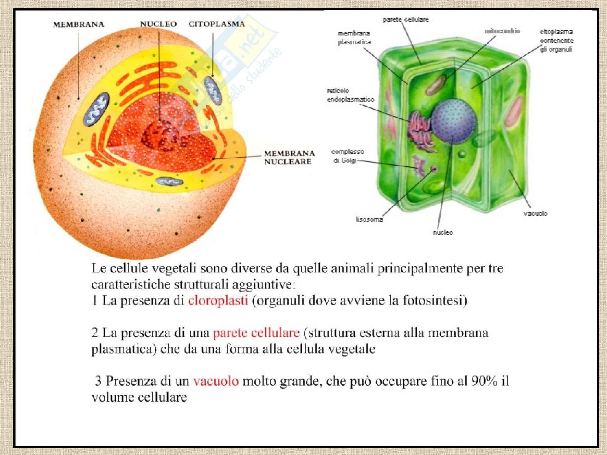 Istologia - Cellula procariote ed eucariote. Pag. 26