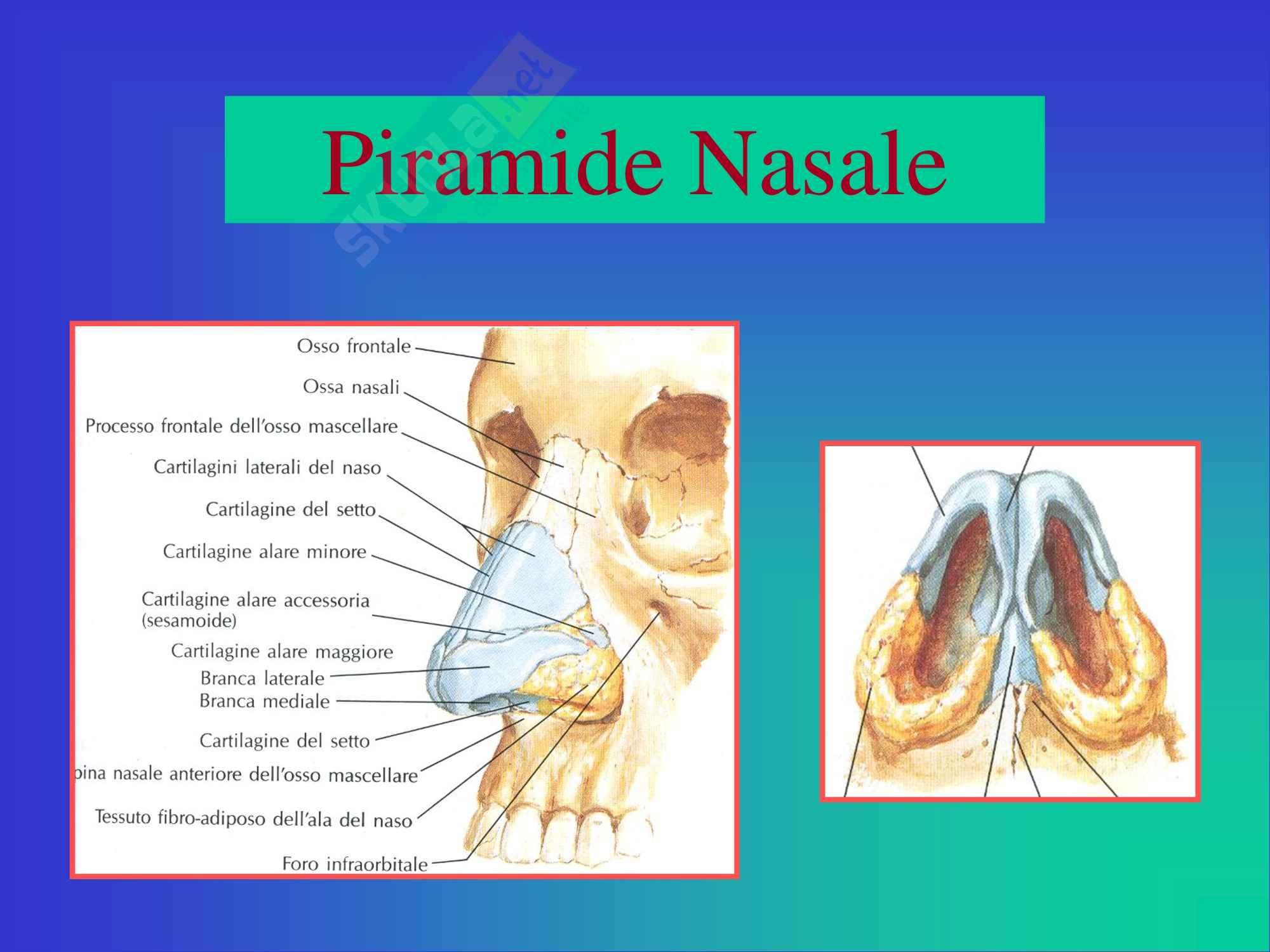 Otorinolaringoiatria - Anatomia e Fisiologia del Naso e Seni Paranasali Pag. 2