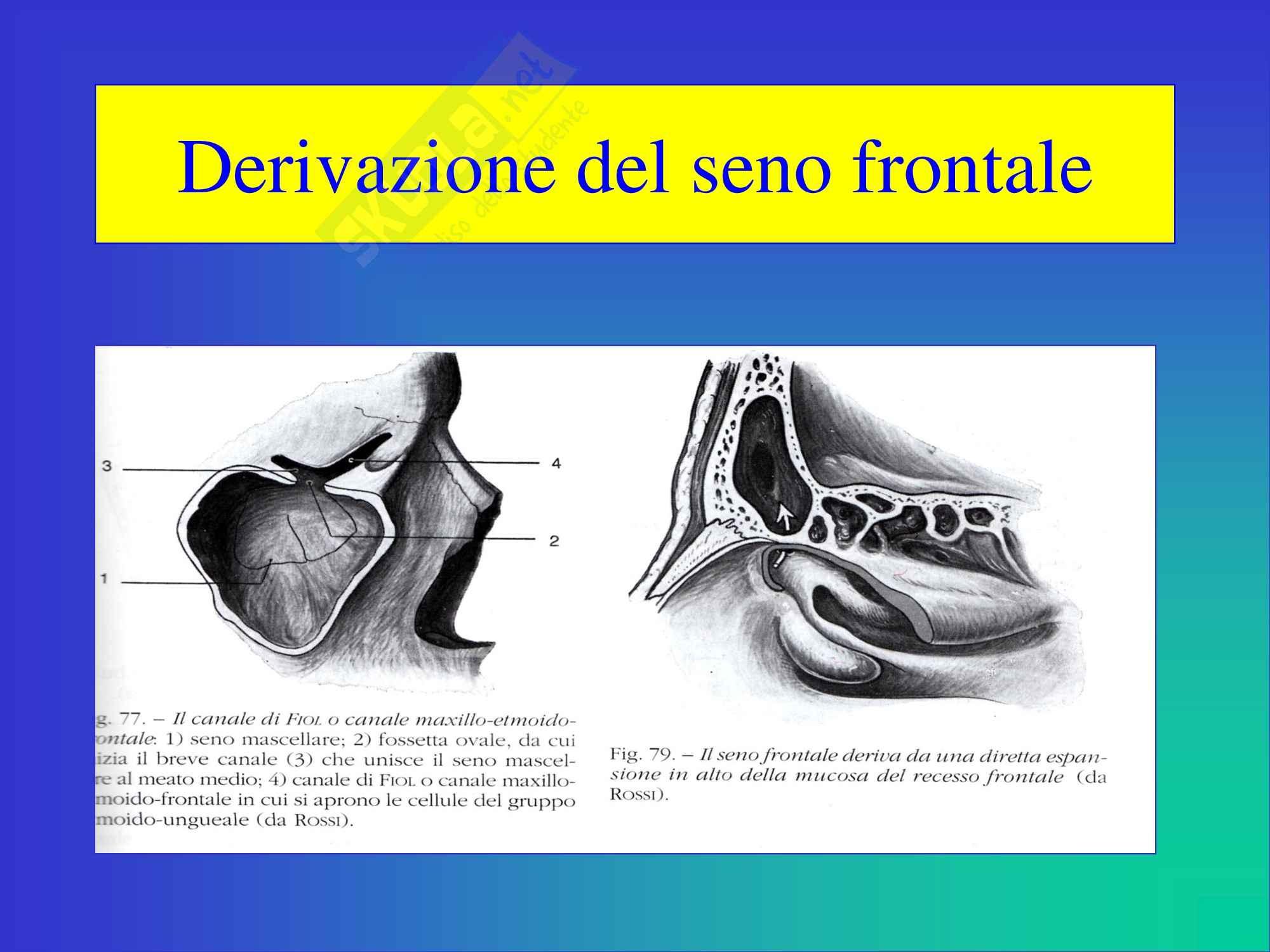 Otorinolaringoiatria - Anatomia e Fisiologia del Naso e Seni Paranasali Pag. 31