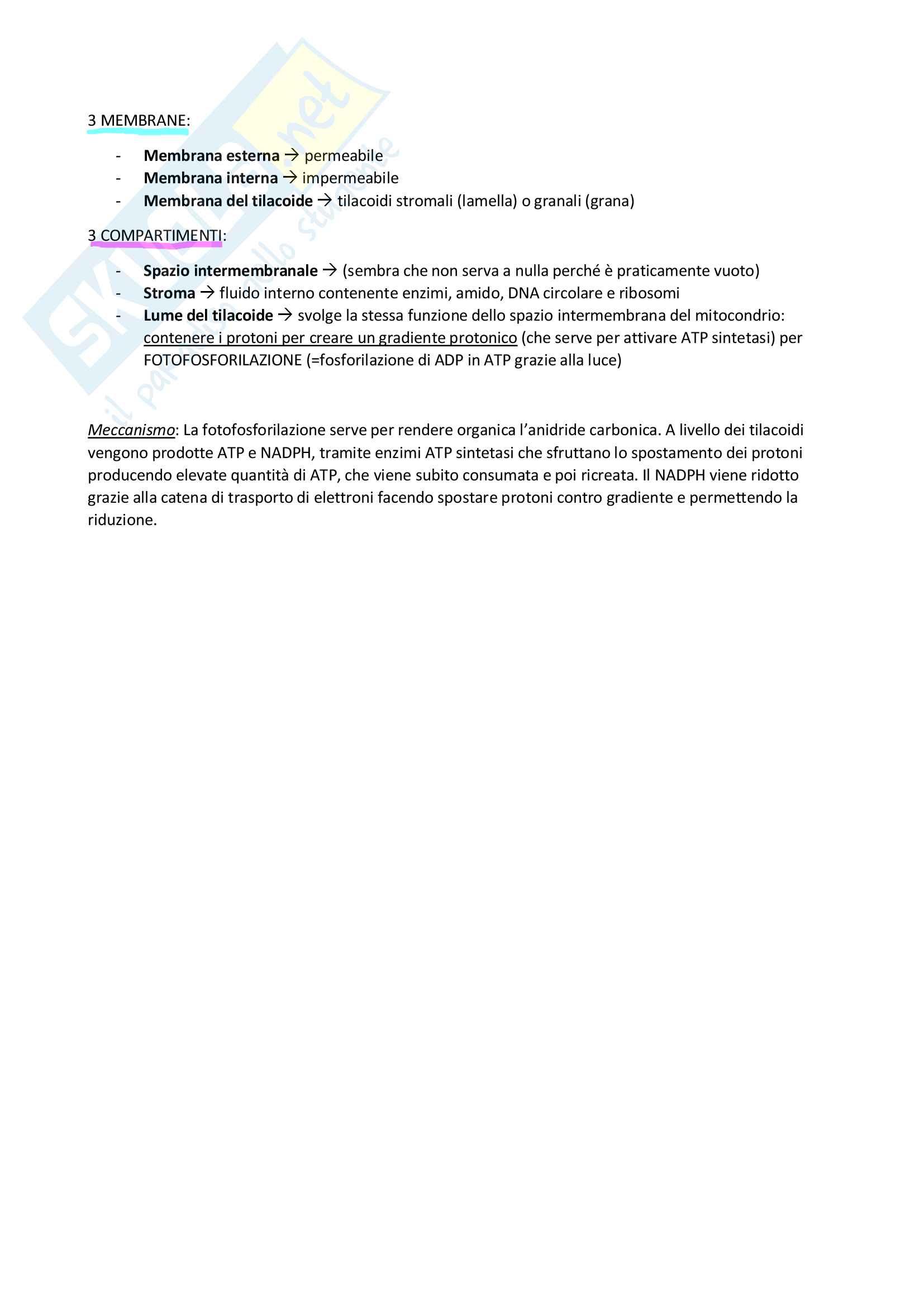 Riassunti di Biologia cellulare Pag. 11