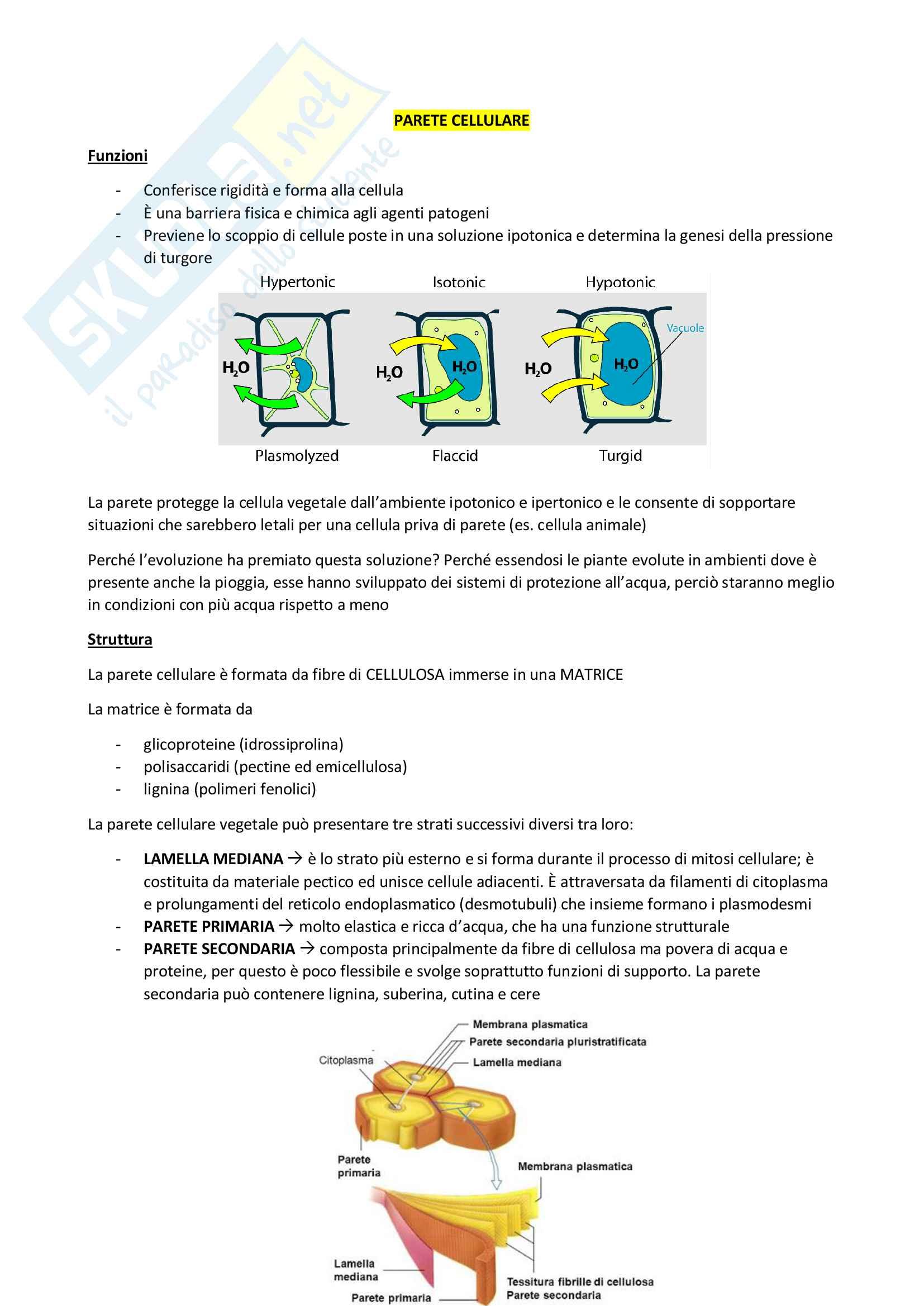 Riassunti di Biologia cellulare Pag. 6