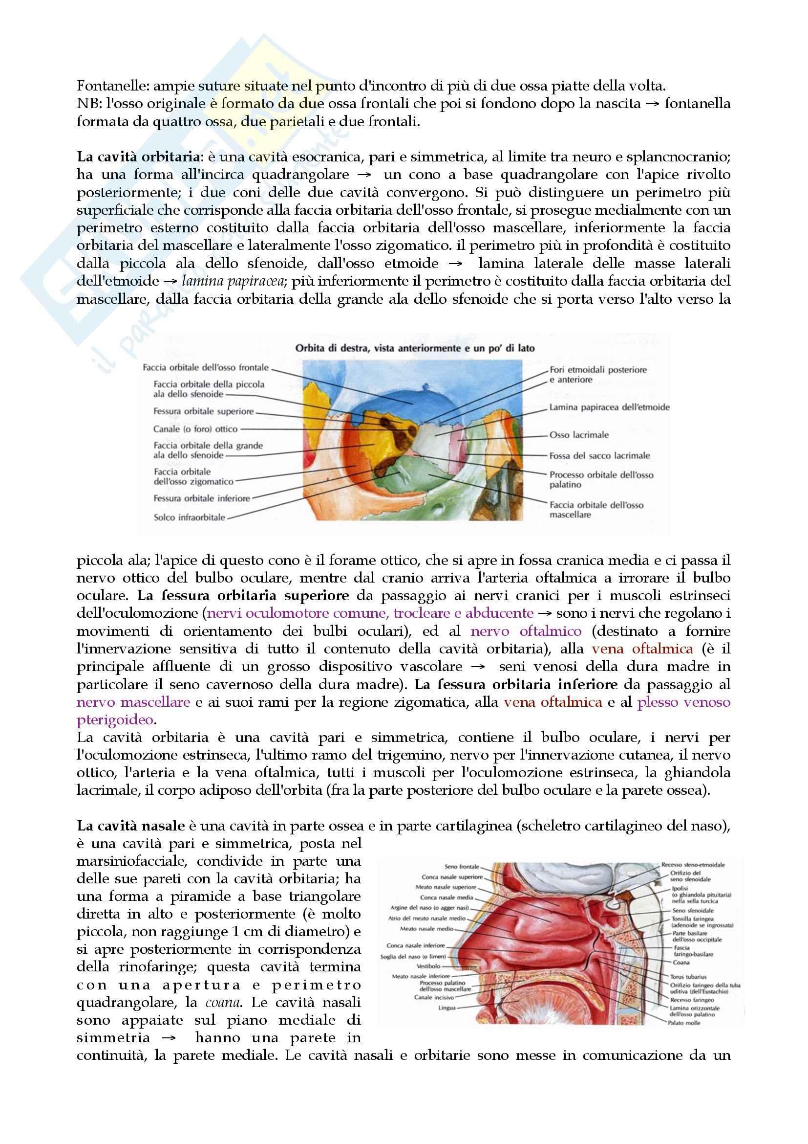 Anatomia: apparato locomotore Pag. 6