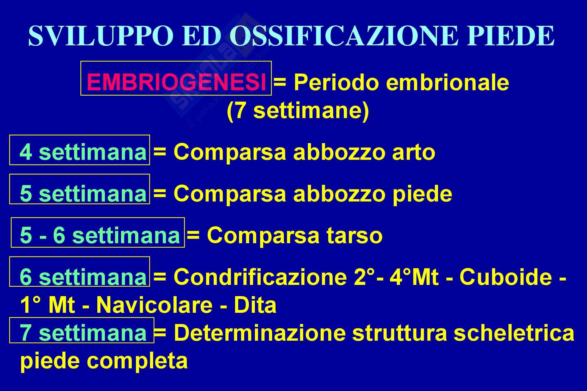 Piede - Ortopedia Pag. 11