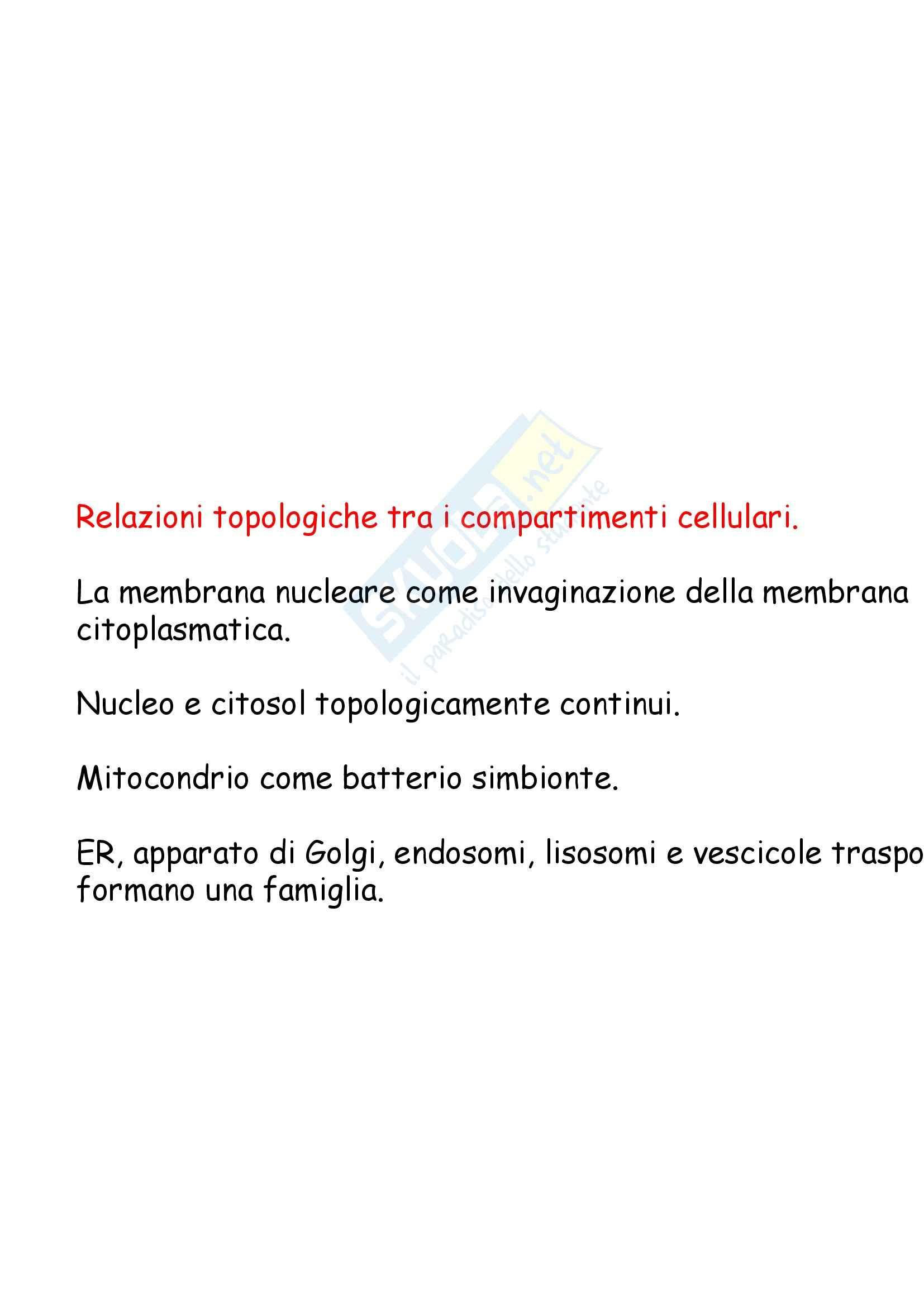 Biologia cellulare - sintesi e smistamento delle proteine Pag. 2