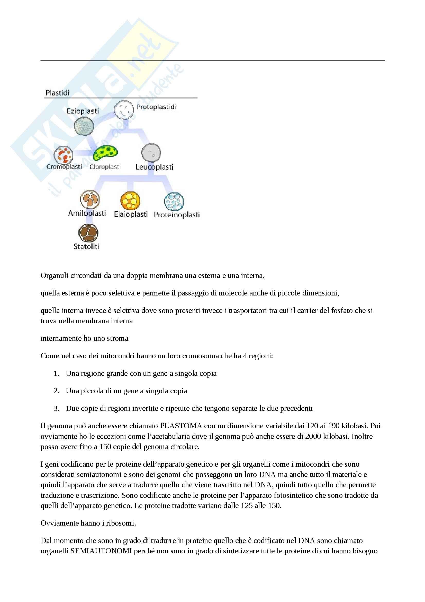 Biochimica vegetale - i plastidi