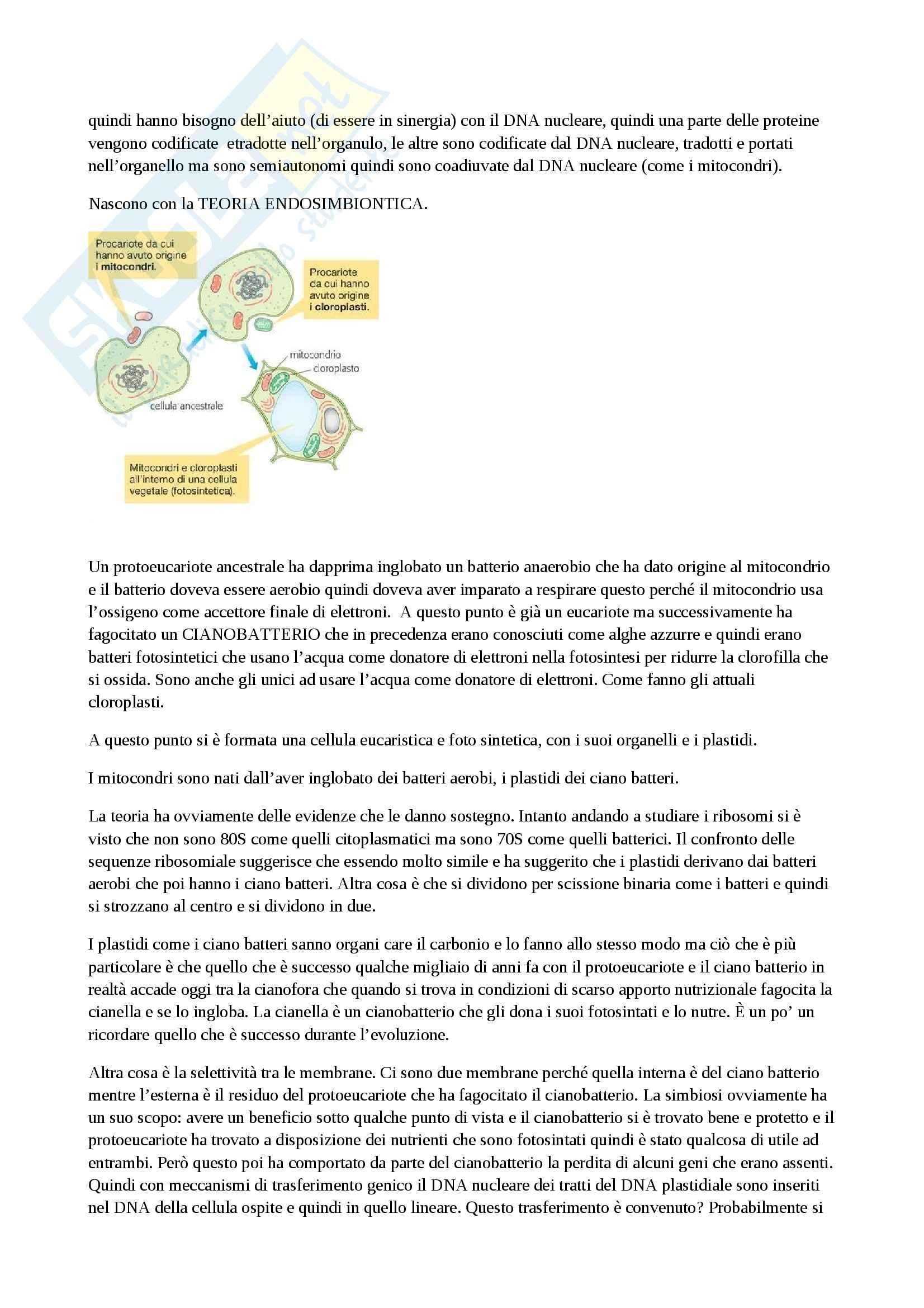 Biochimica vegetale - i plastidi Pag. 2
