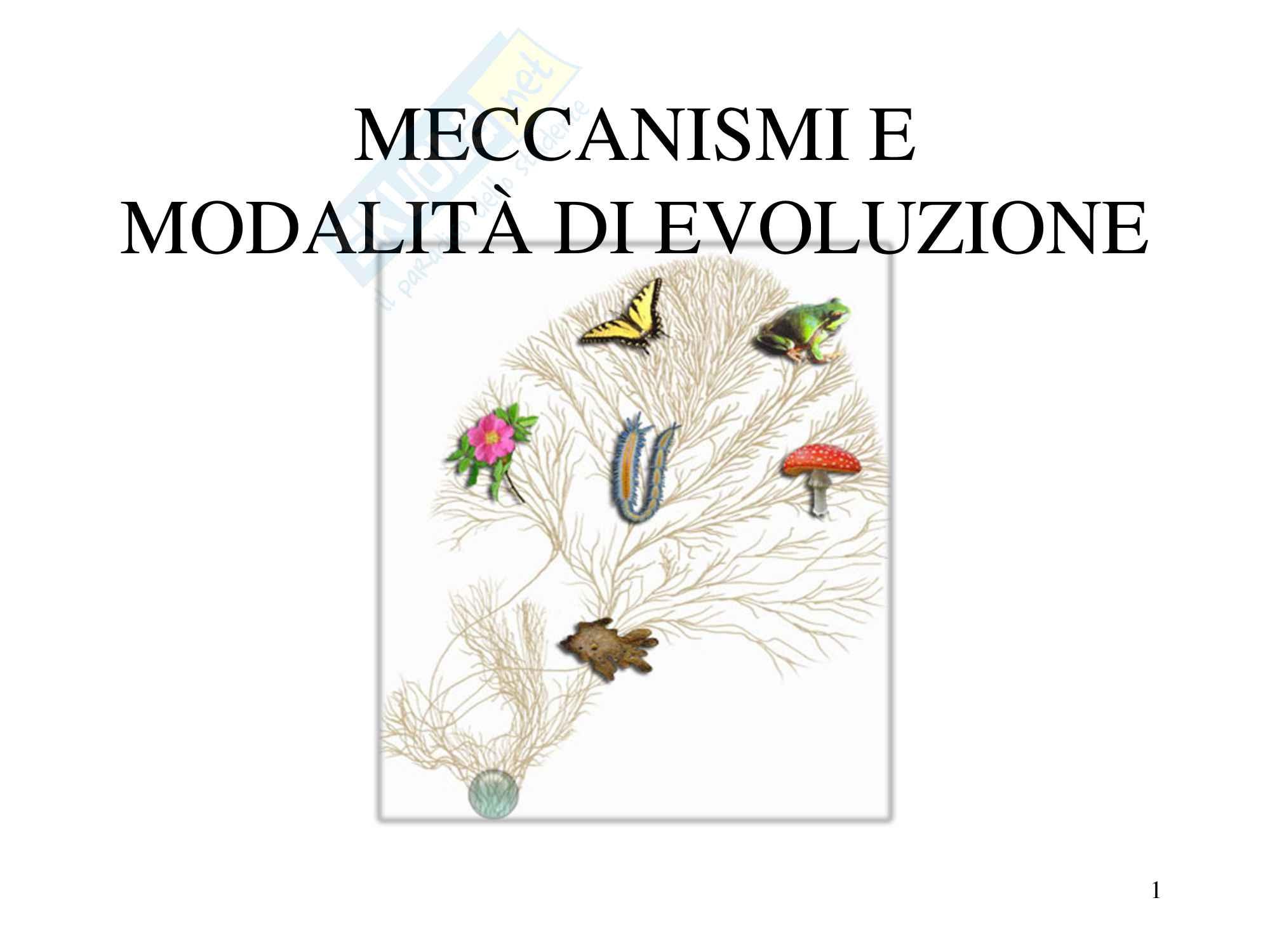 Zoologia meccanismi e modalità di evoluzione, scienze biologiche