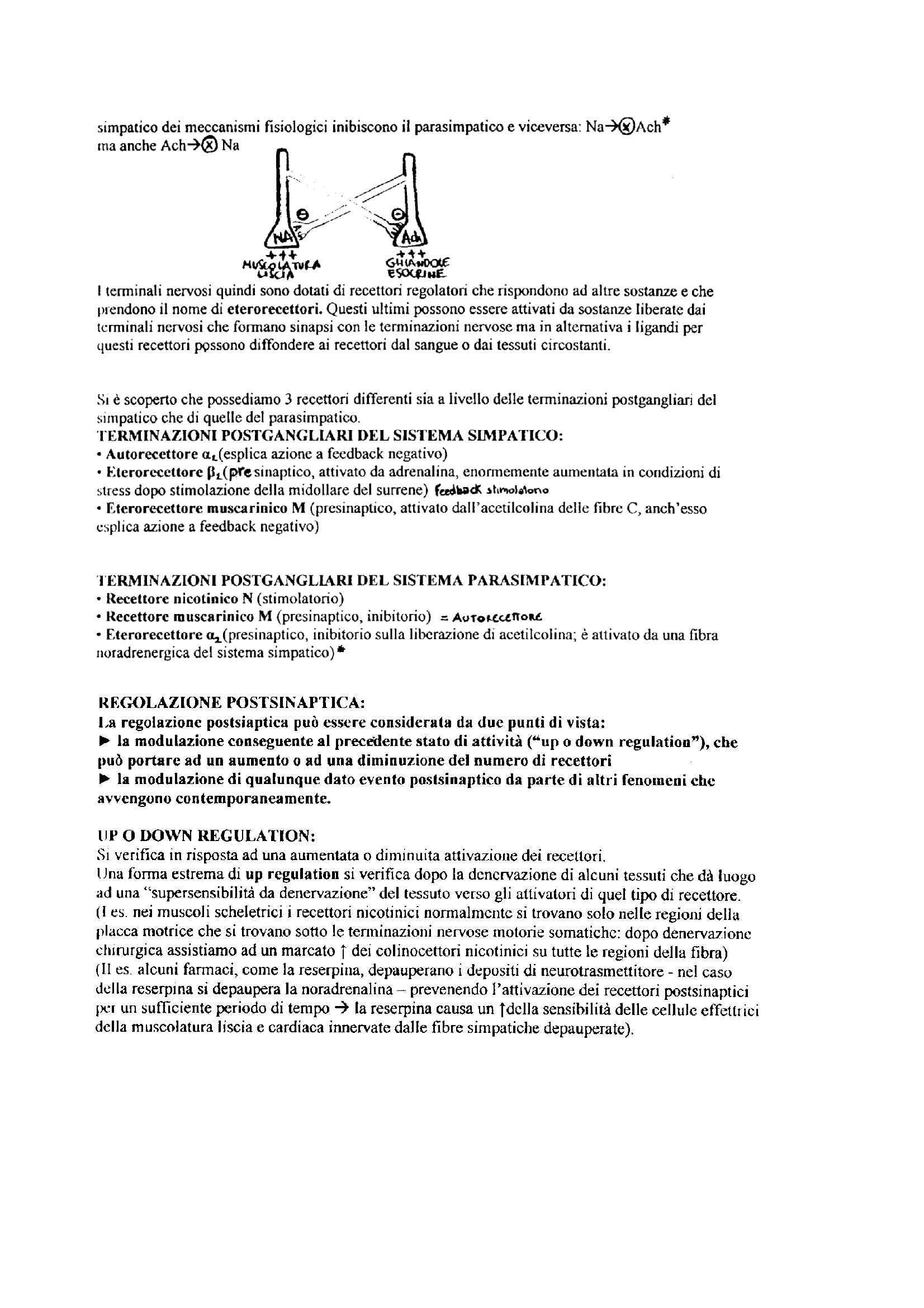 Farmacologia e tossicologia - schema sul sistema nervoso autonomo Pag. 6