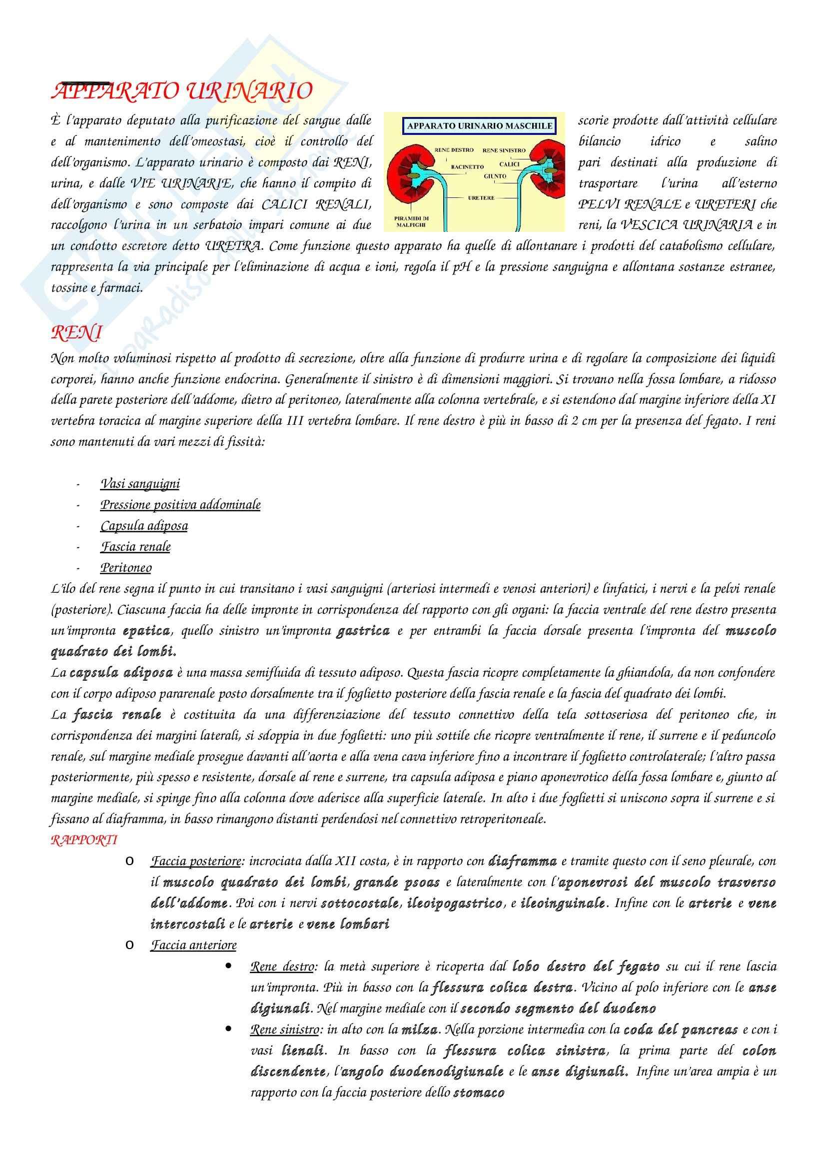 appunto M. Gesi Anatomia con elementi di istologia
