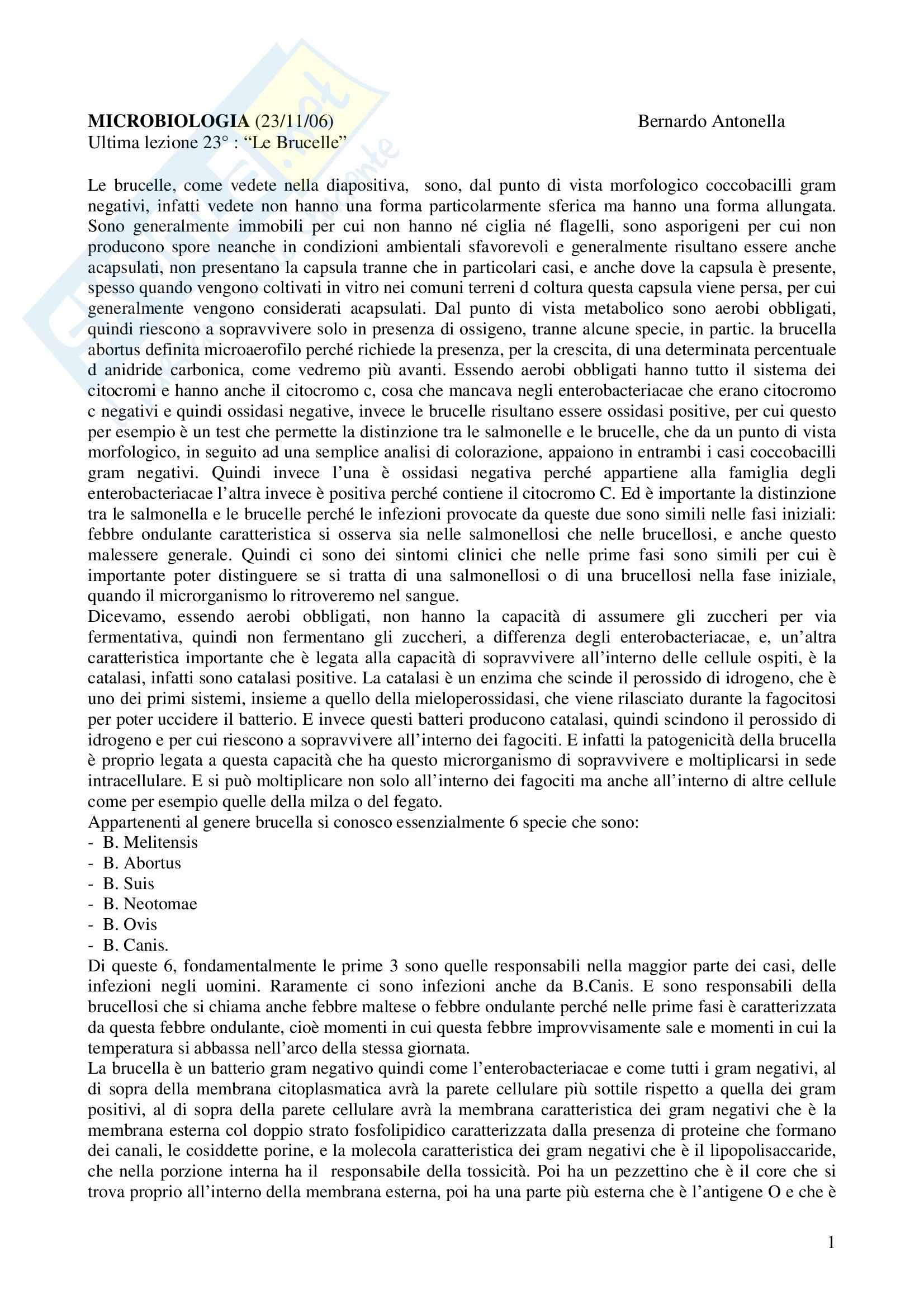Microbiologia - brucella