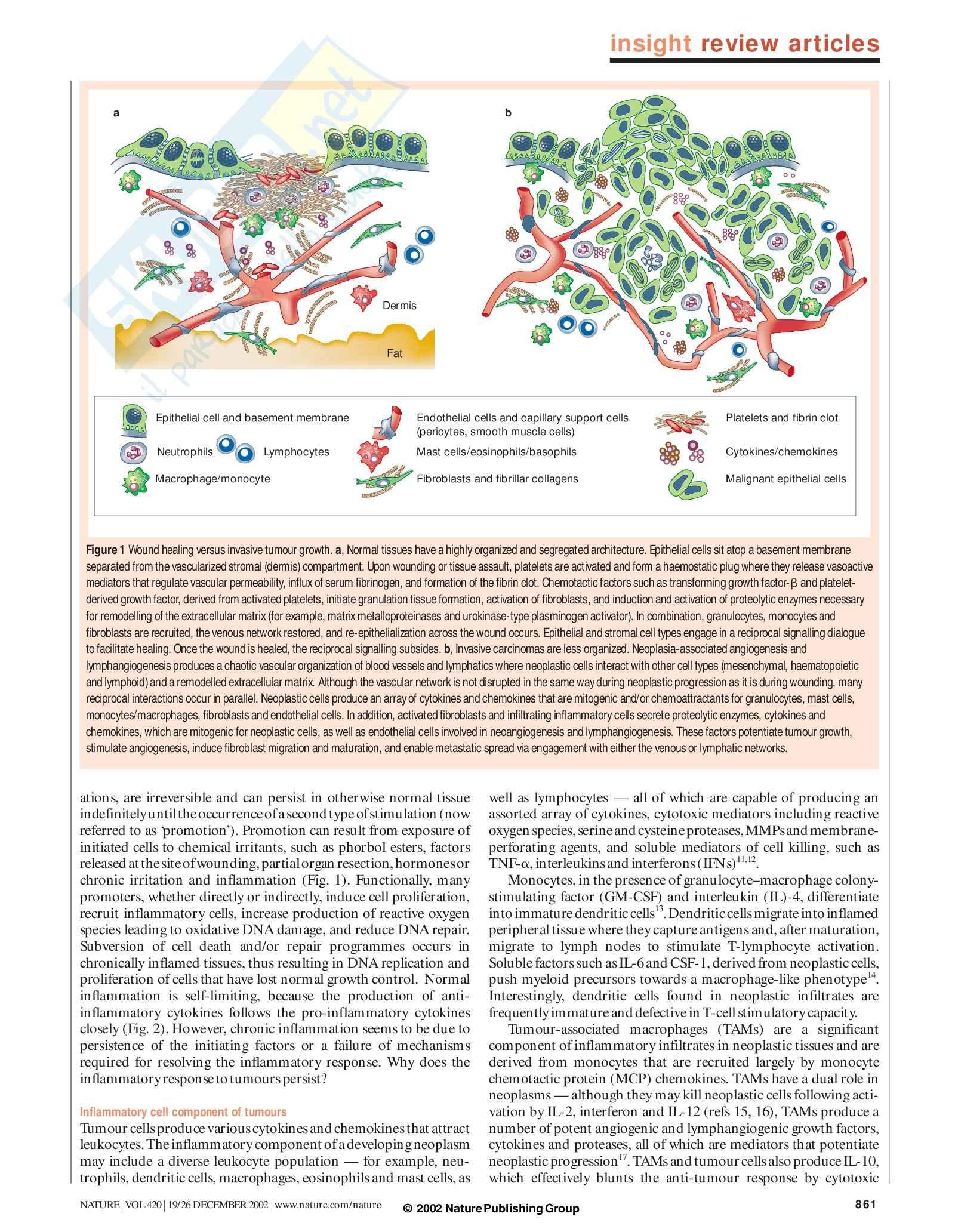 Patologia e fisiopatologia generale - infiammazione e tumori seconda parte Pag. 2