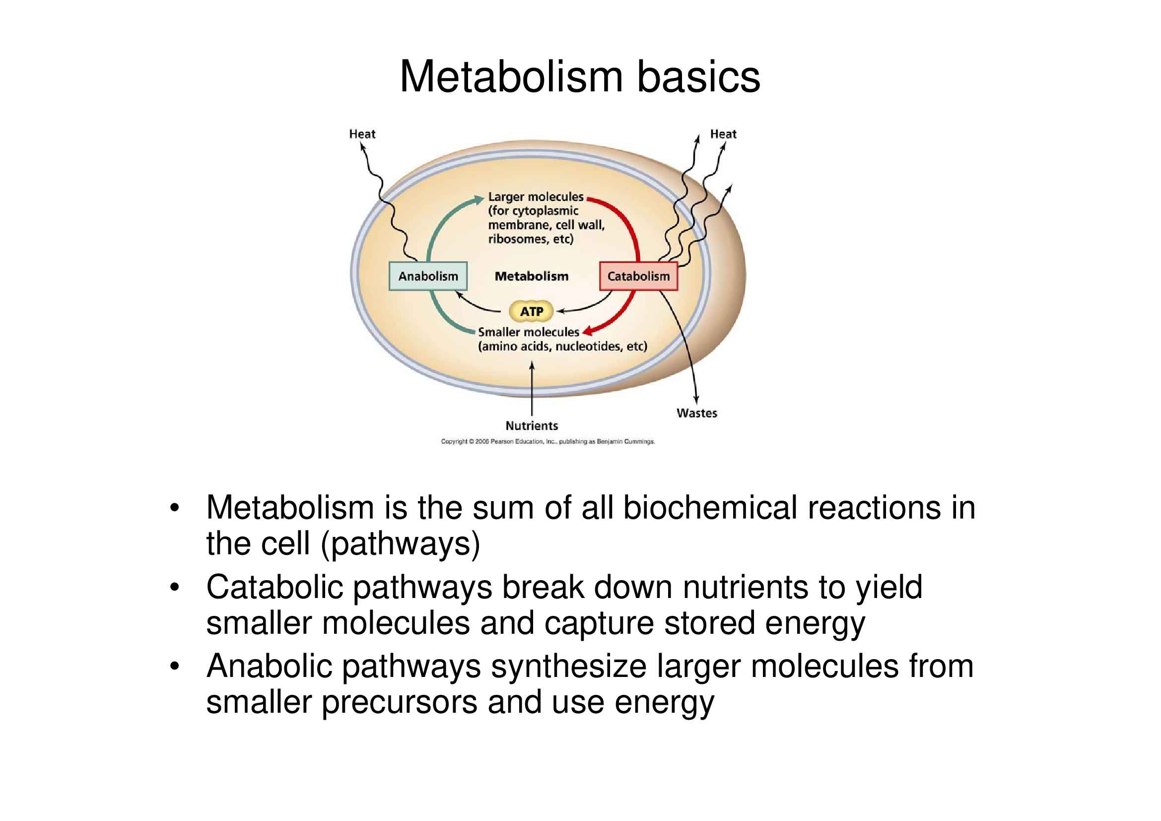 Metabolismo basico