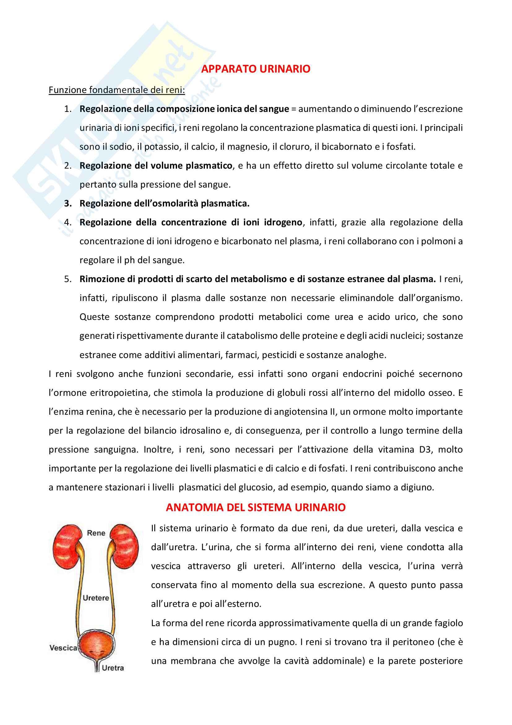 Appunti di Anatomia e Fisiologia dell'apparato urinario