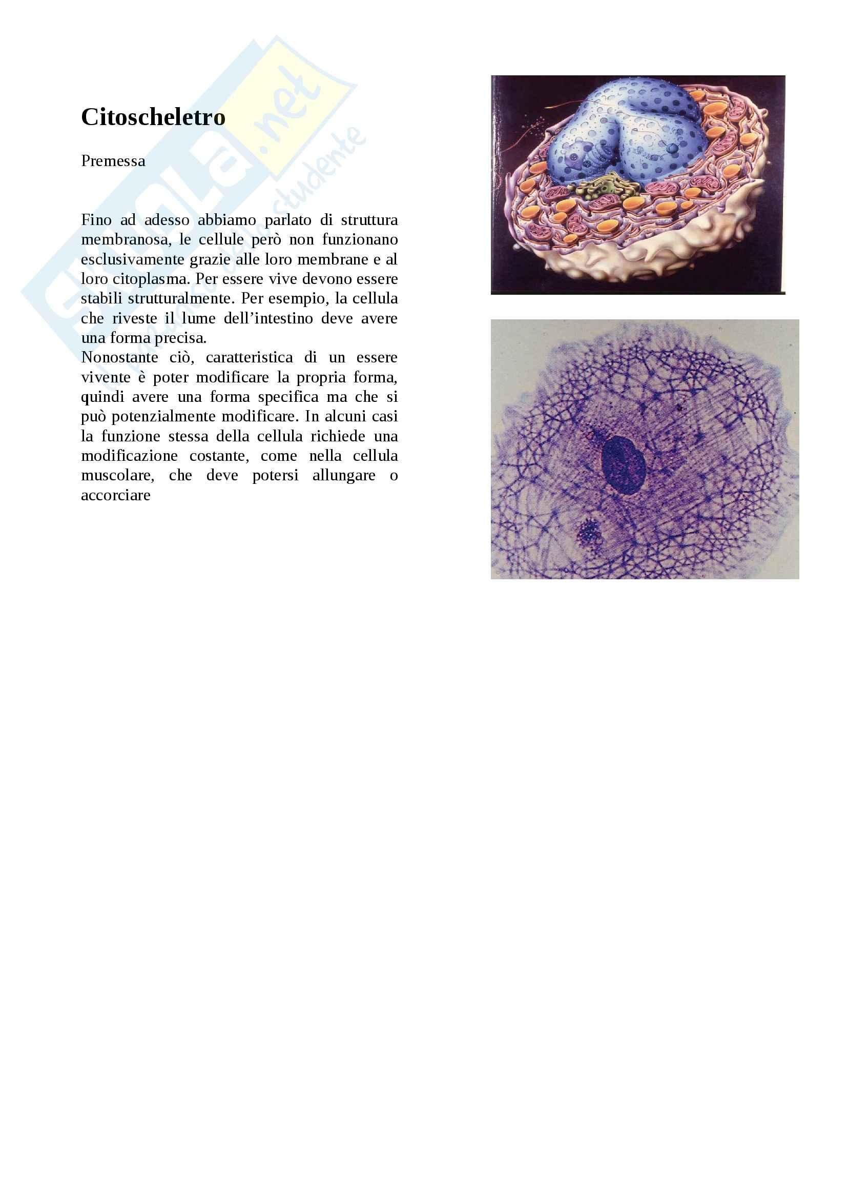 Citologia - citoscheletro e Microtubuli