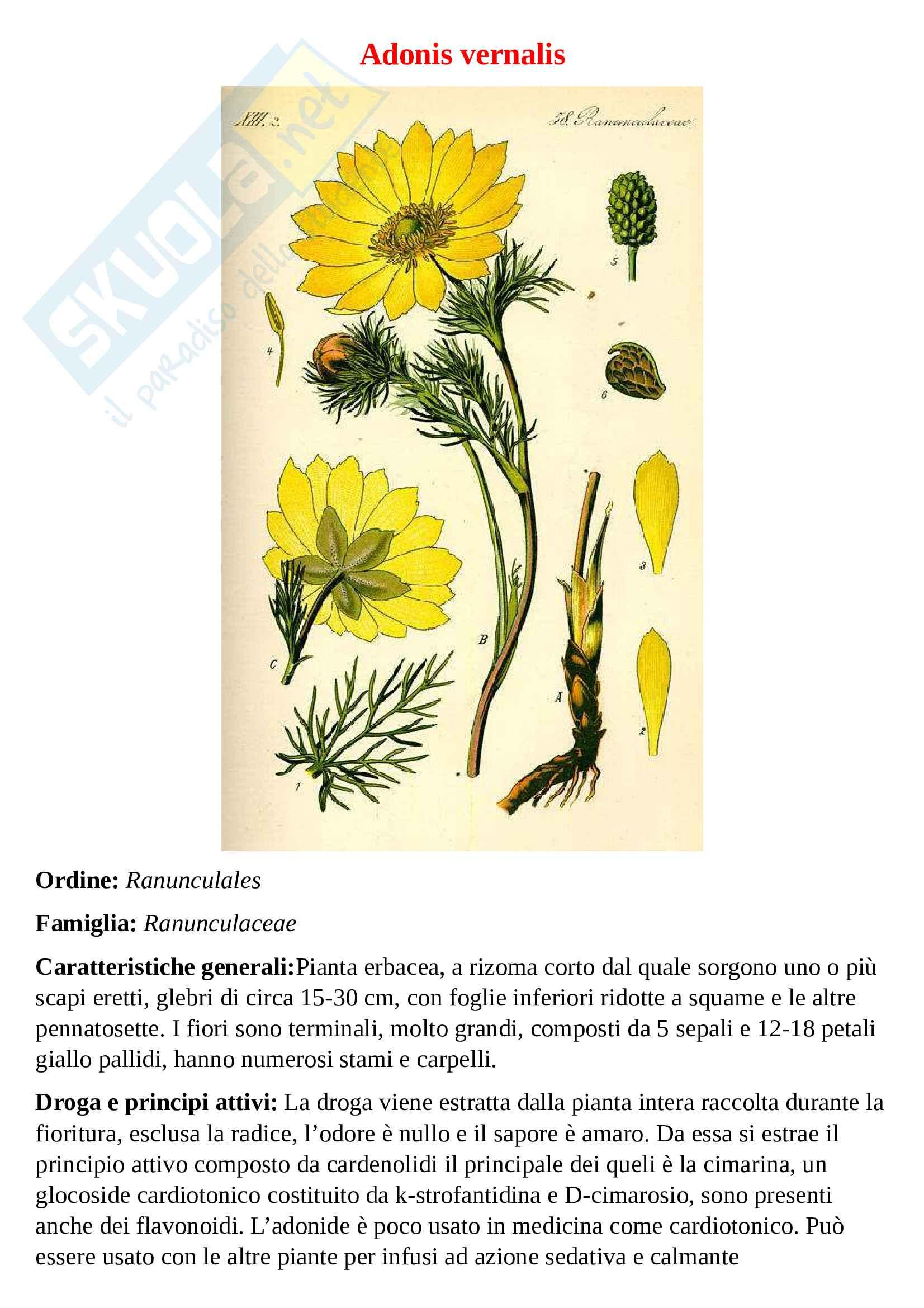 Tavole botaniche Pag. 11