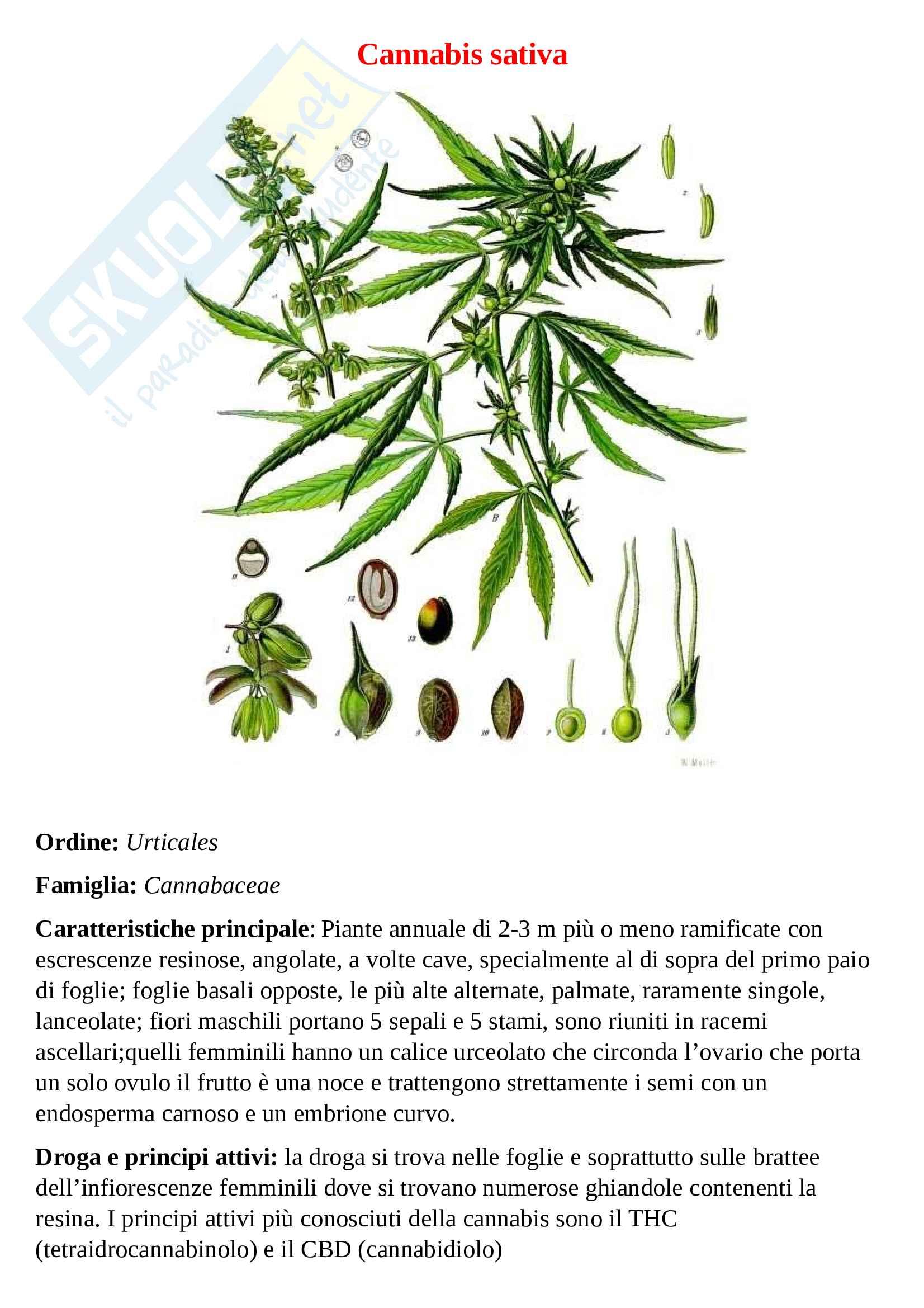 Tavole botaniche Pag. 16