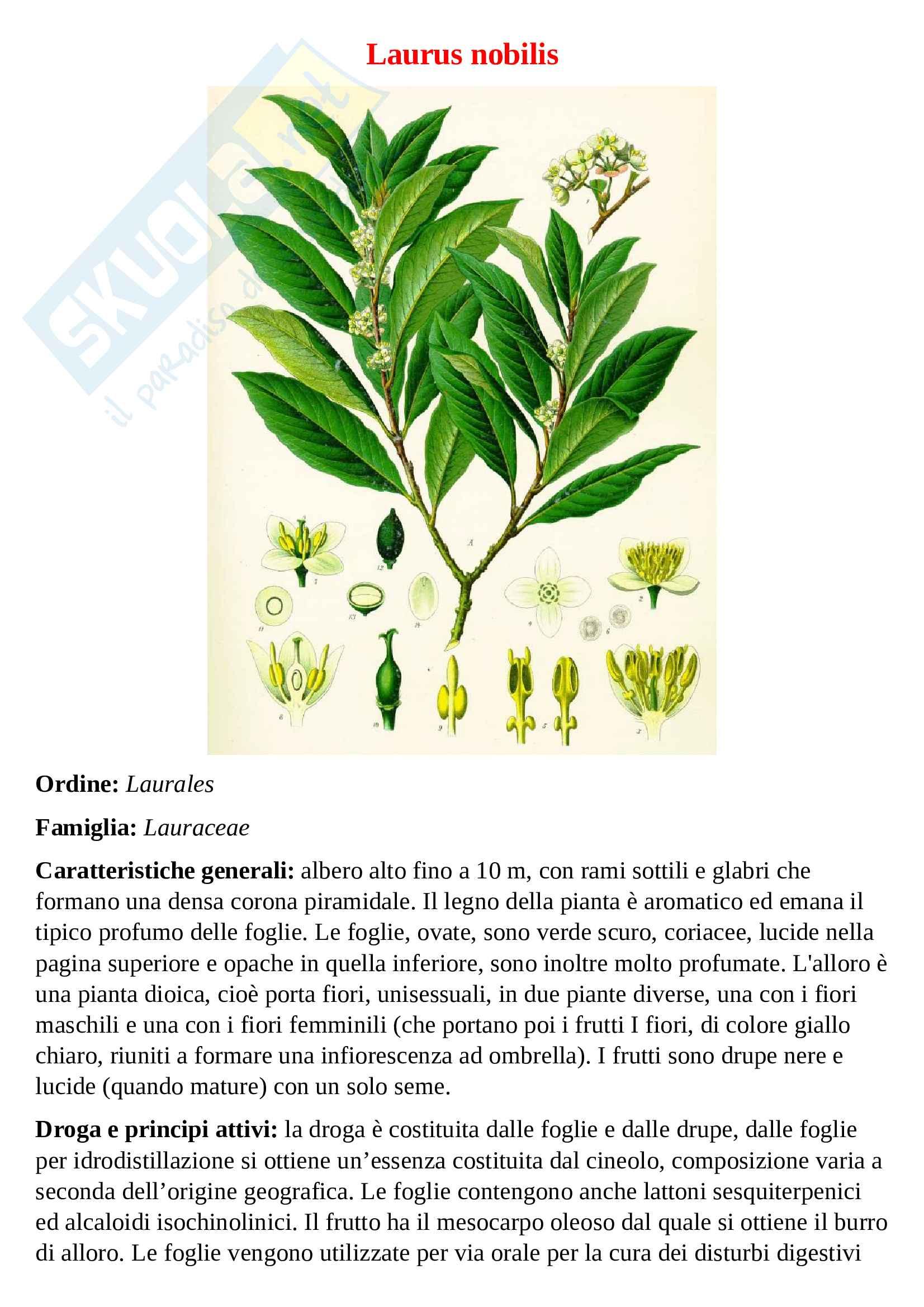 Tavole botaniche Pag. 6